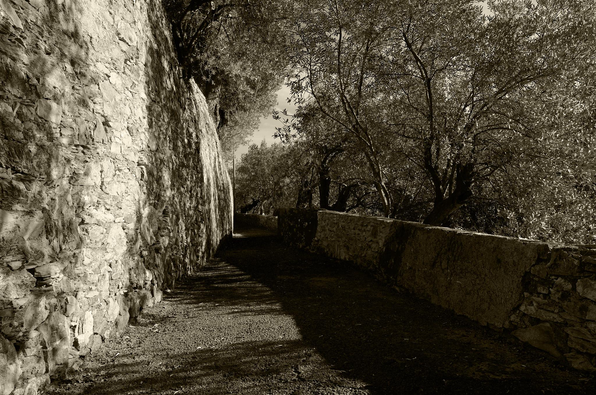 Olive by fabrizio.mantelli.39