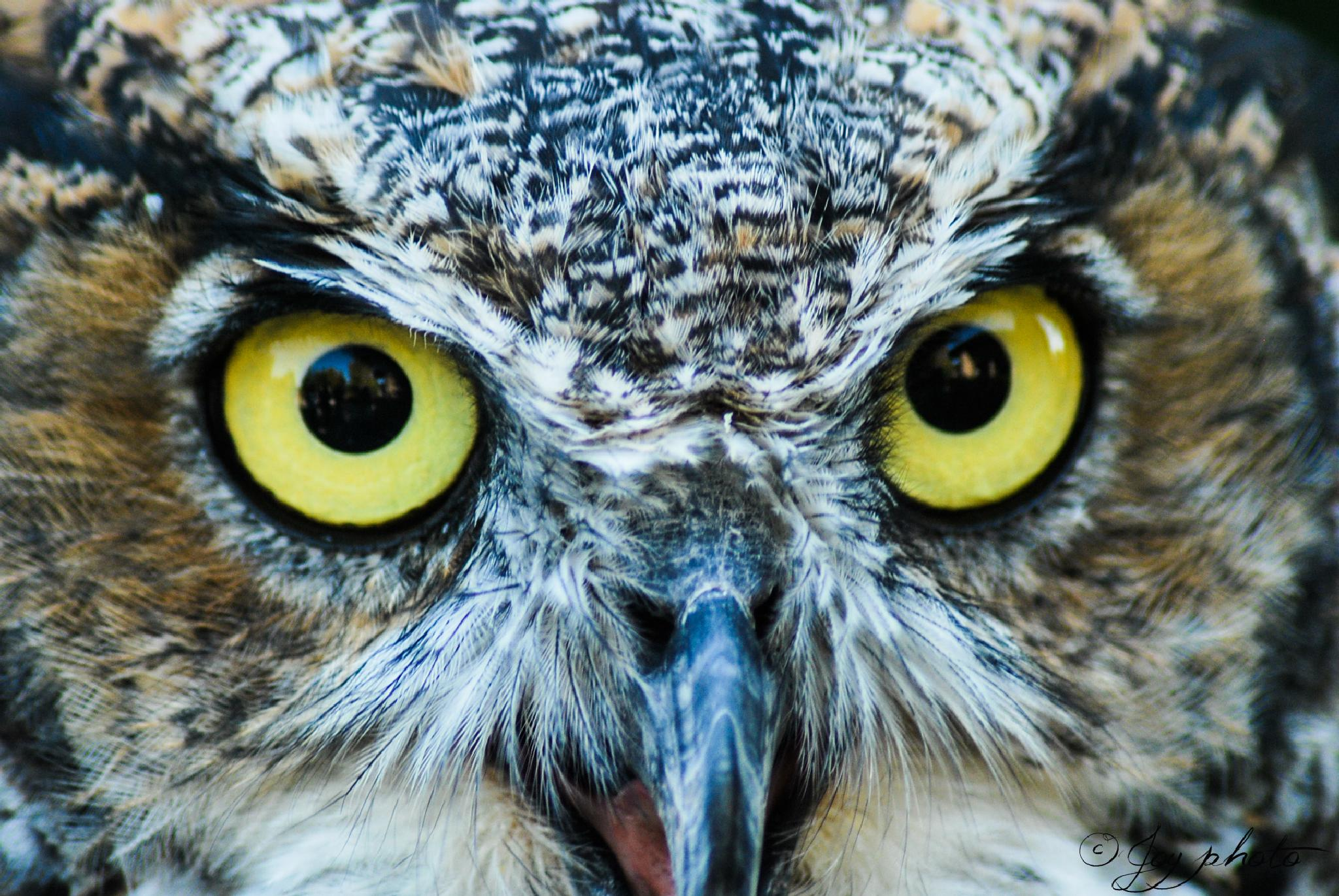 The owl is watching... by Yvon Guignard