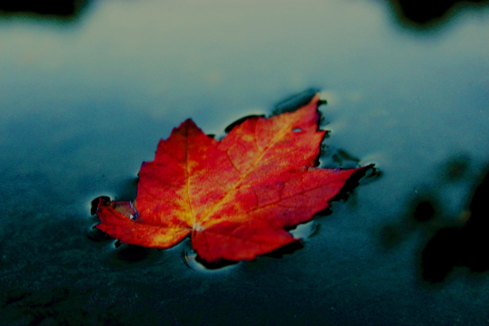 Autumn leaf. by Duval