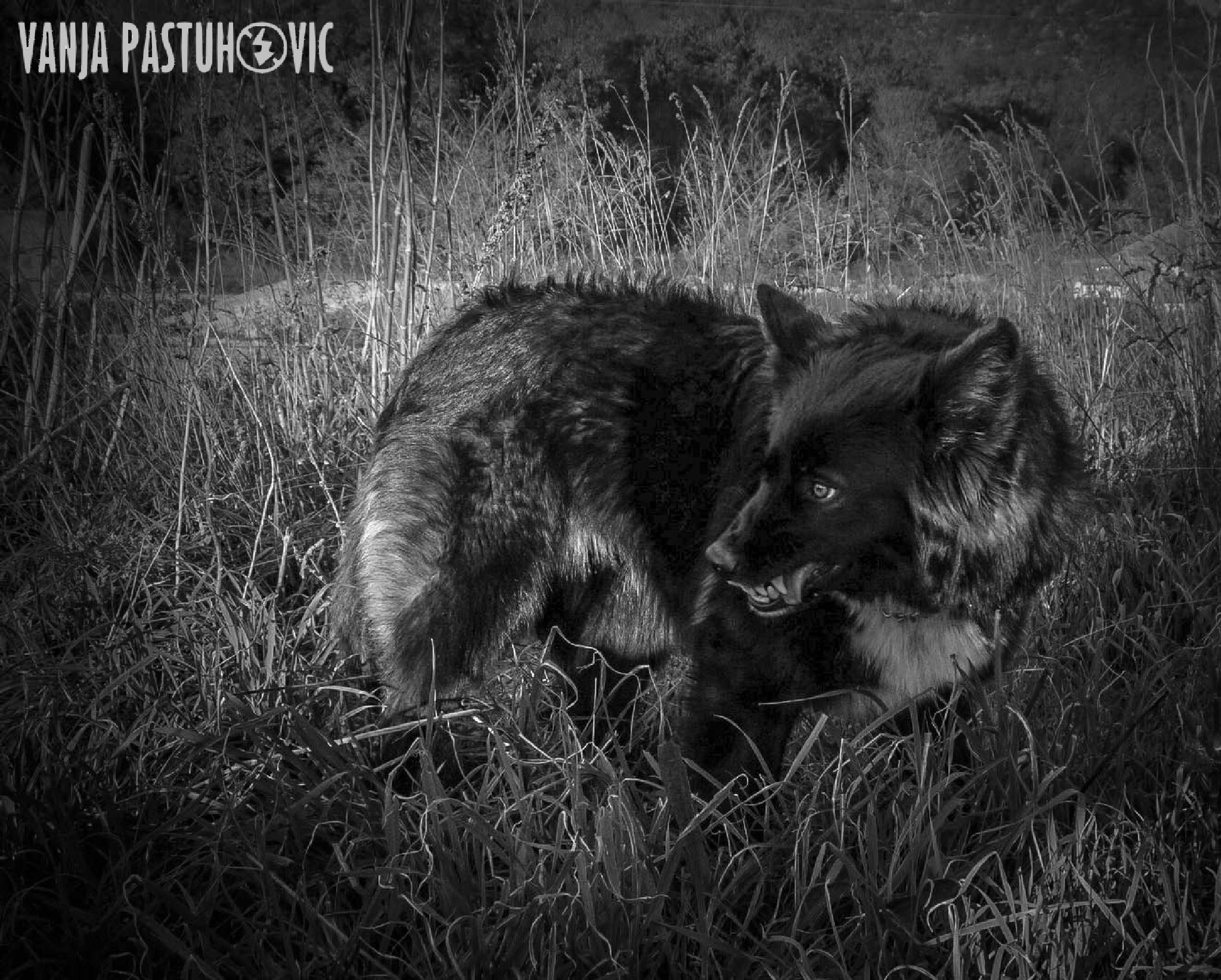 Instinct ..... by Vanja Pastuhovic