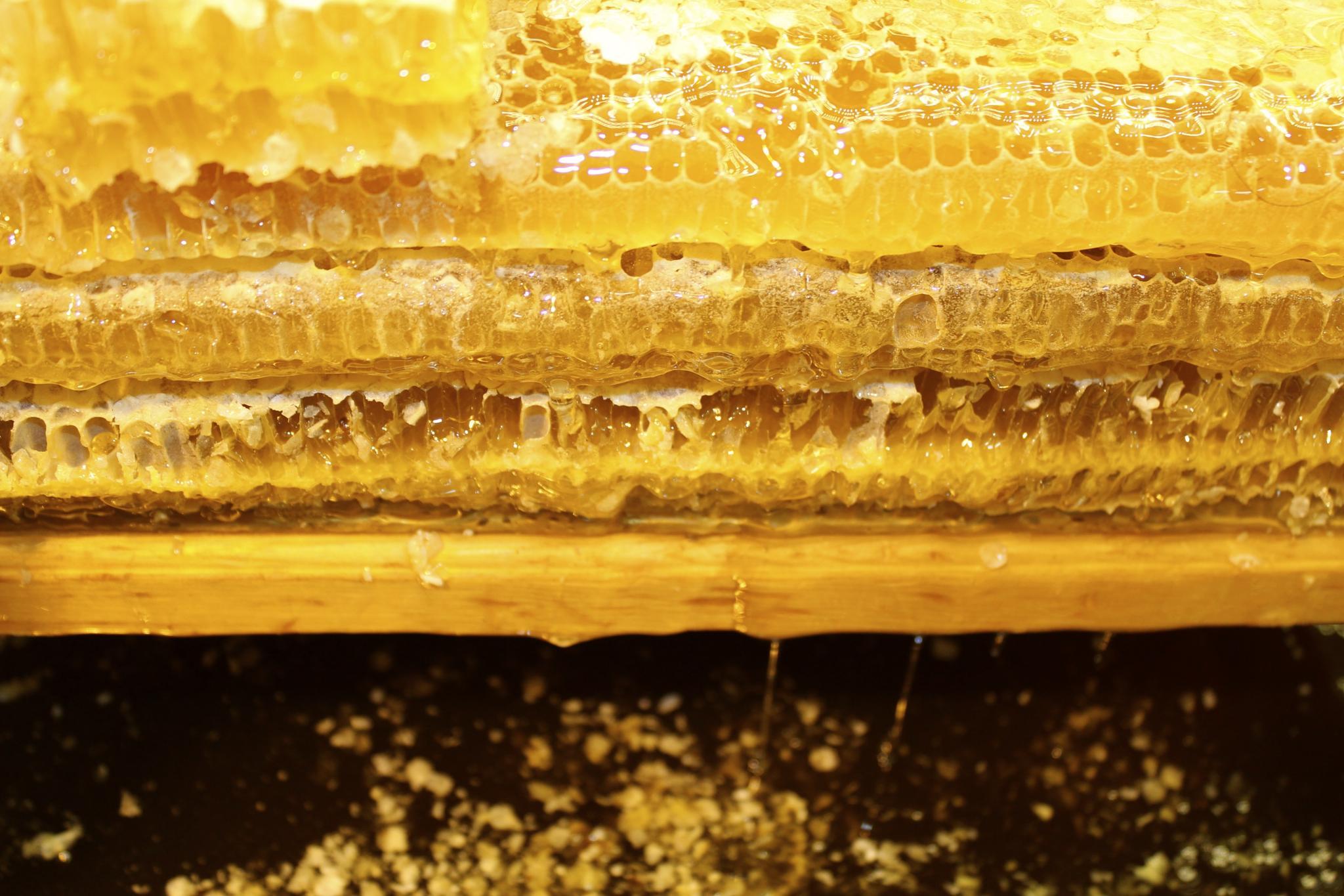 Sweet Sweet Honey by londoneti