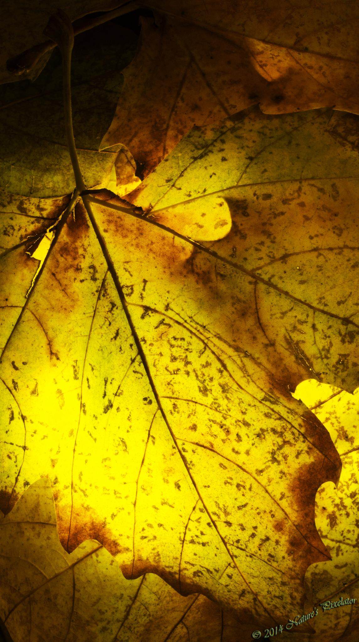Autumn Fire Indoors ! by Nature's Pixelator