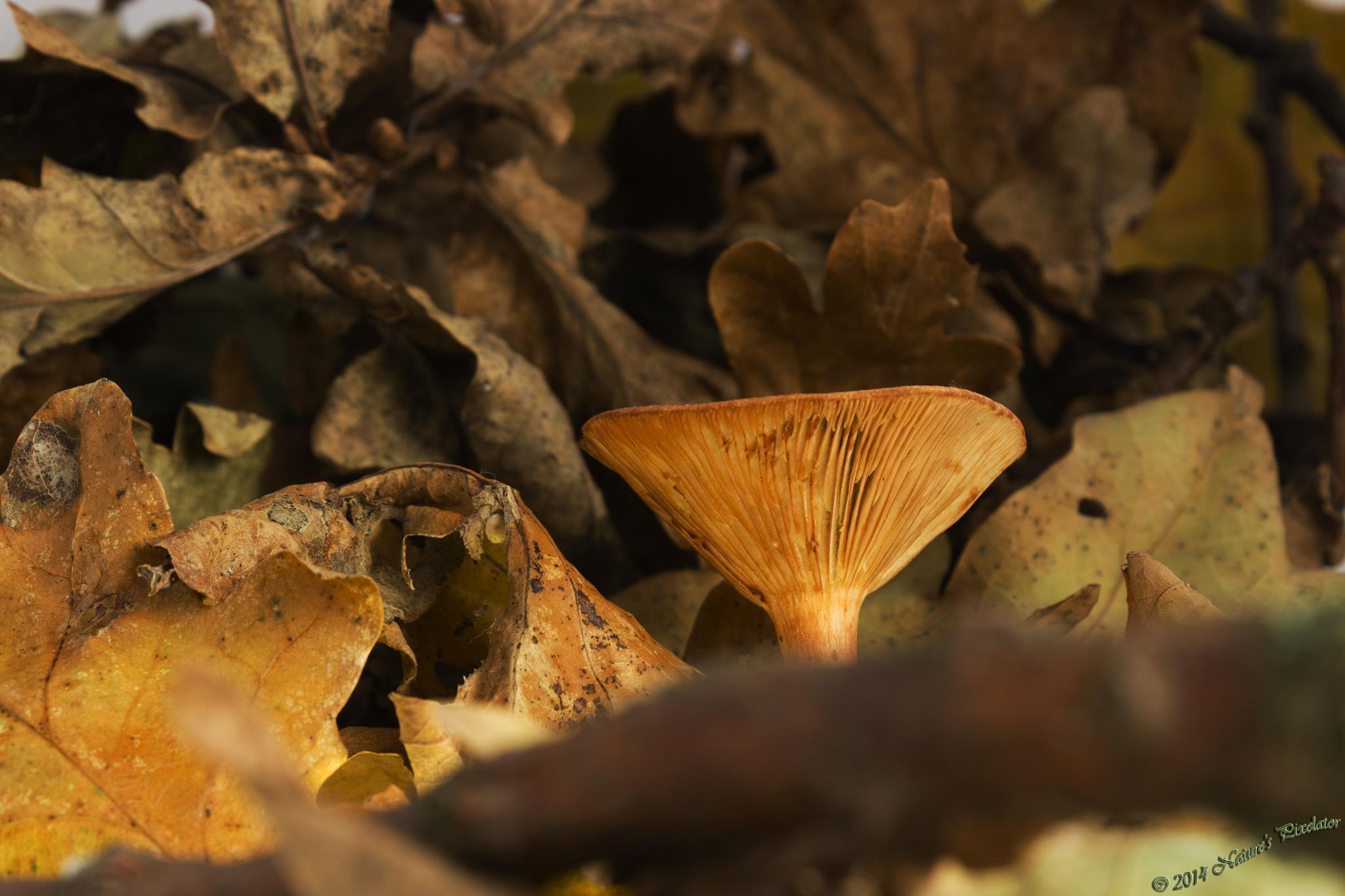 Mushroom or Bongo Drum ? by Nature's Pixelator