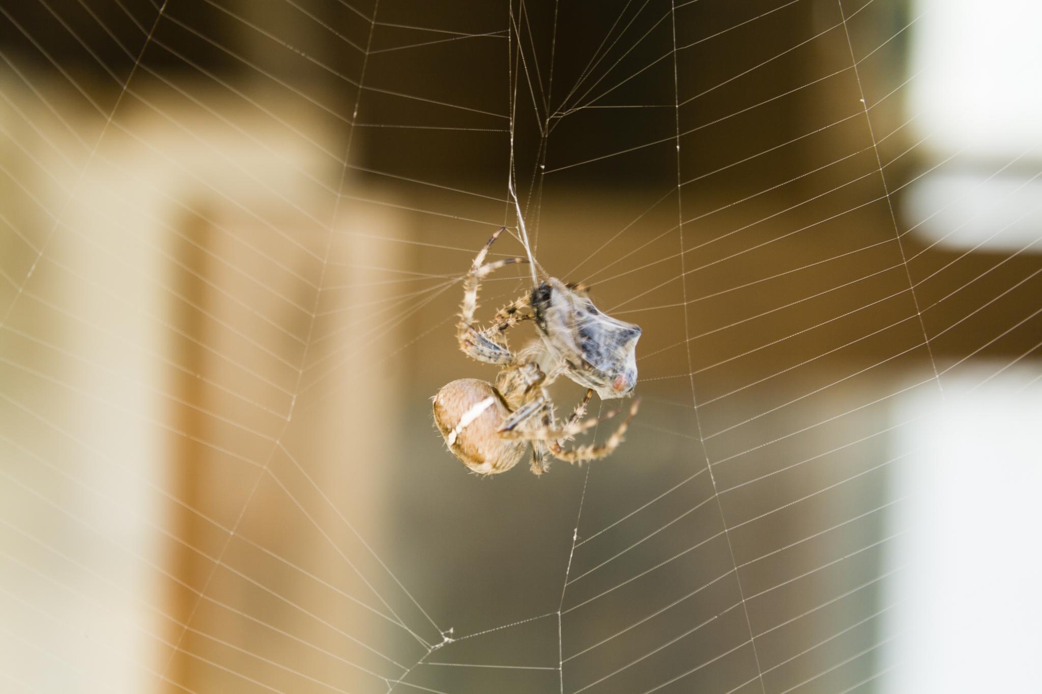 Silk Spraying ! by Nature's Pixelator