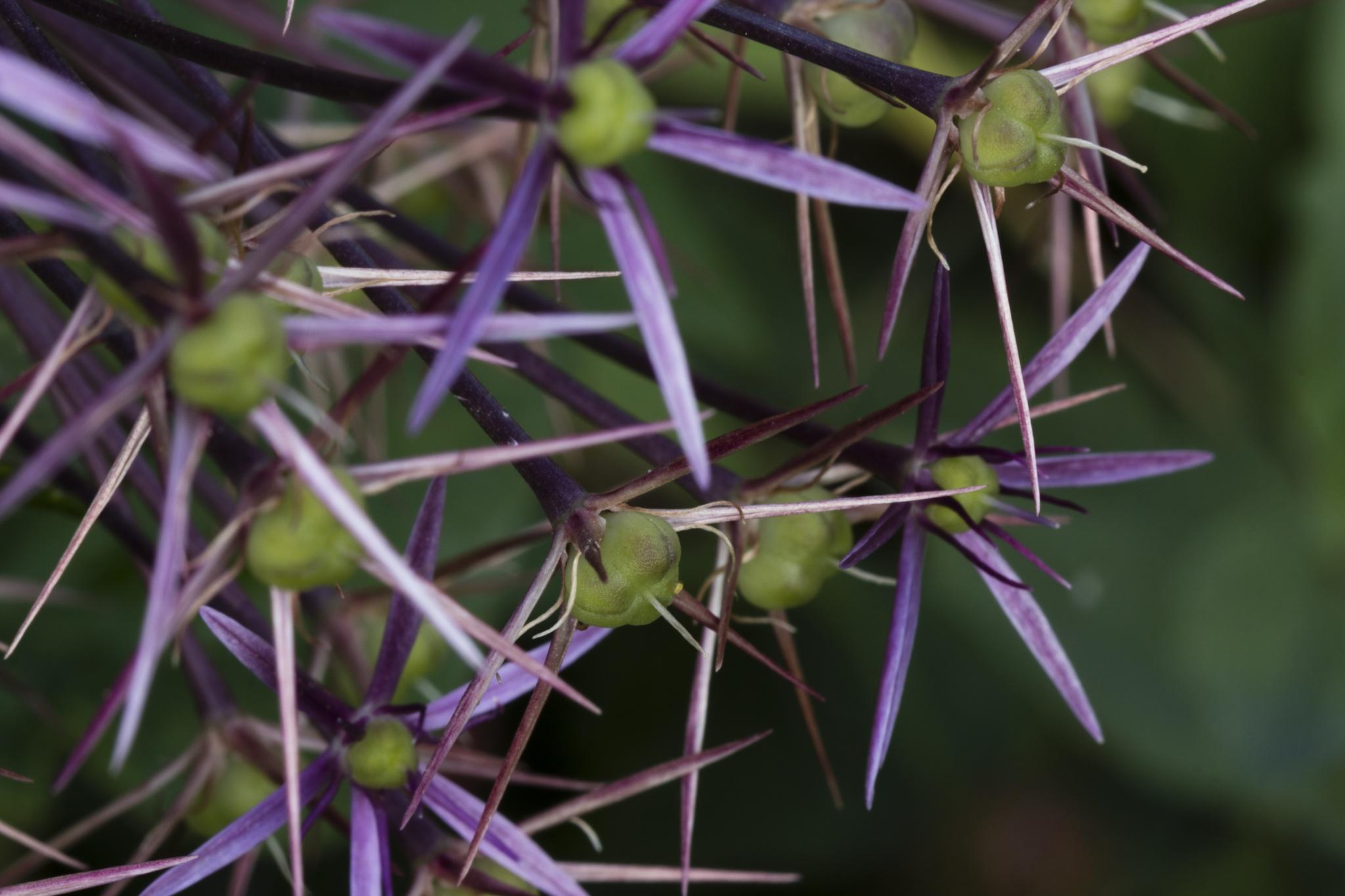 Do Flowers get Goosebumps ? by Nature's Pixelator