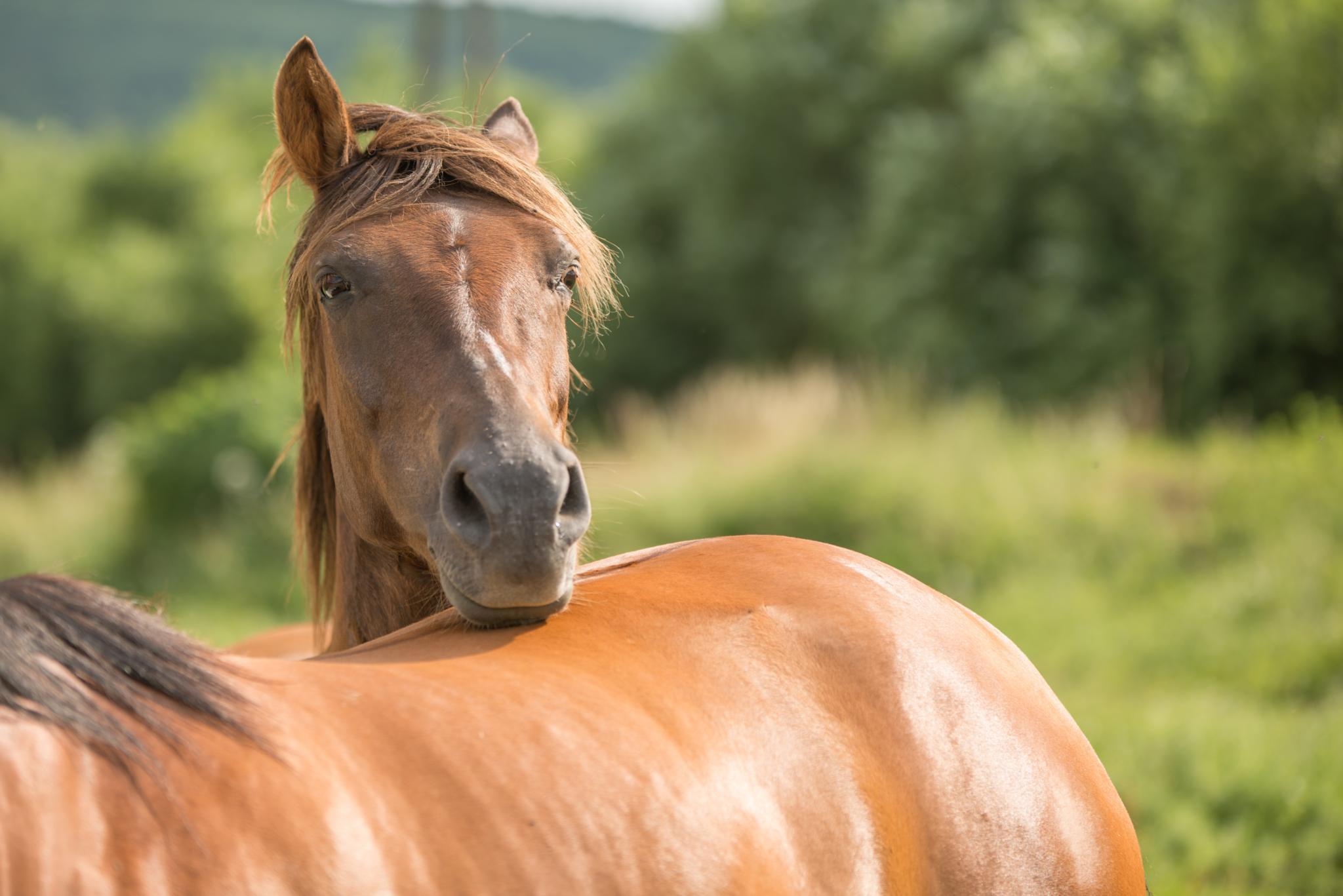 Photo in Animal #nikon #d800 #sigma #horse #animal