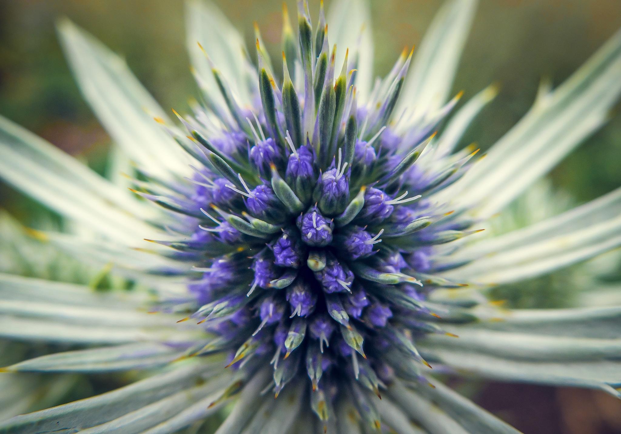 flower by Zoltan Kovacs