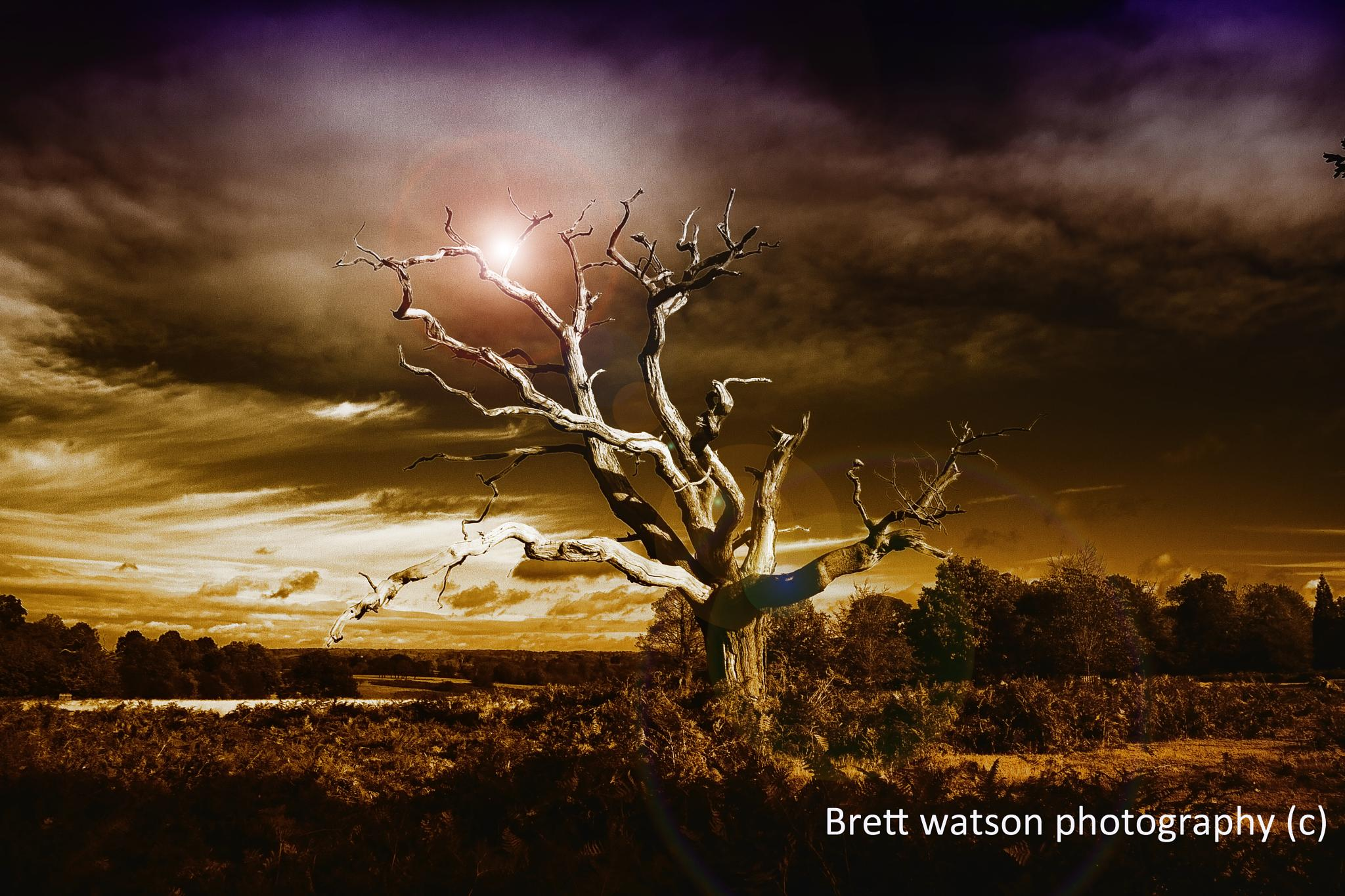 the old tree at knole aprk by brettphotography