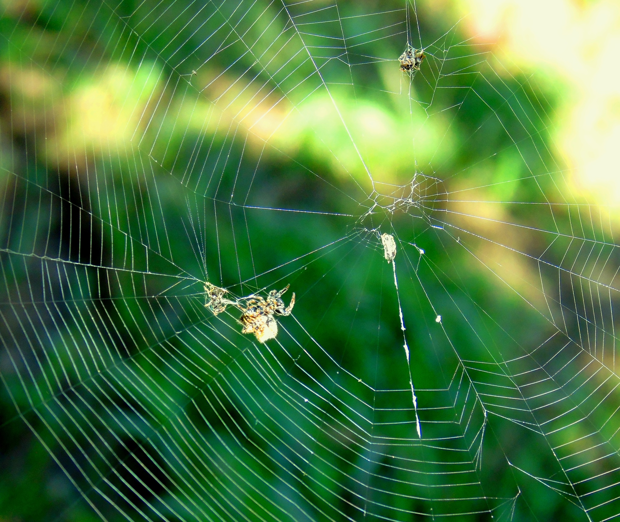 A Spider in Your Beautiful Work! by Bené Menezes