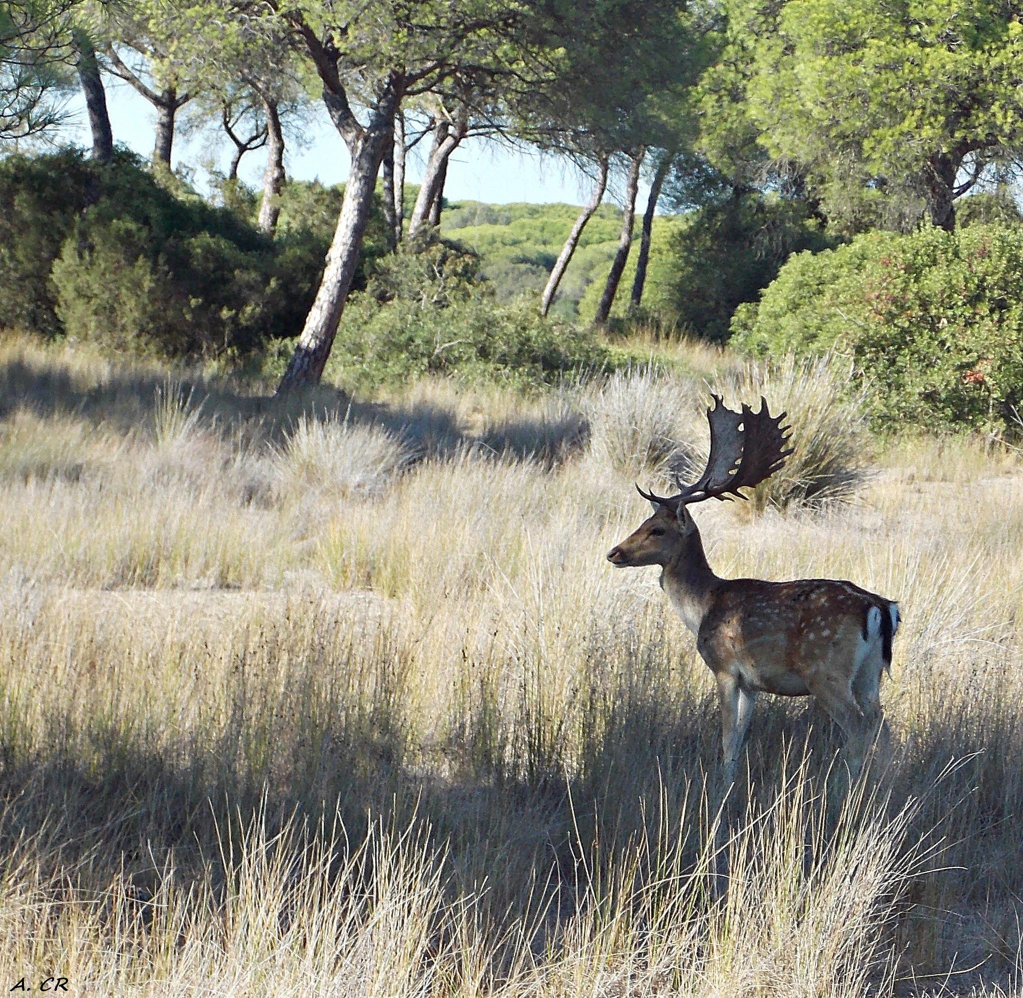 Parque Nacional Coto de Doñana III by A. Castellano Rodriguez