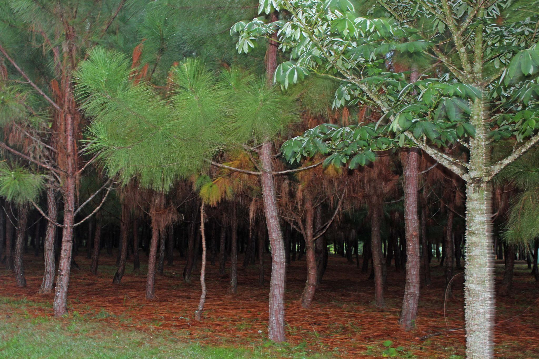 Forest by vani.hdz