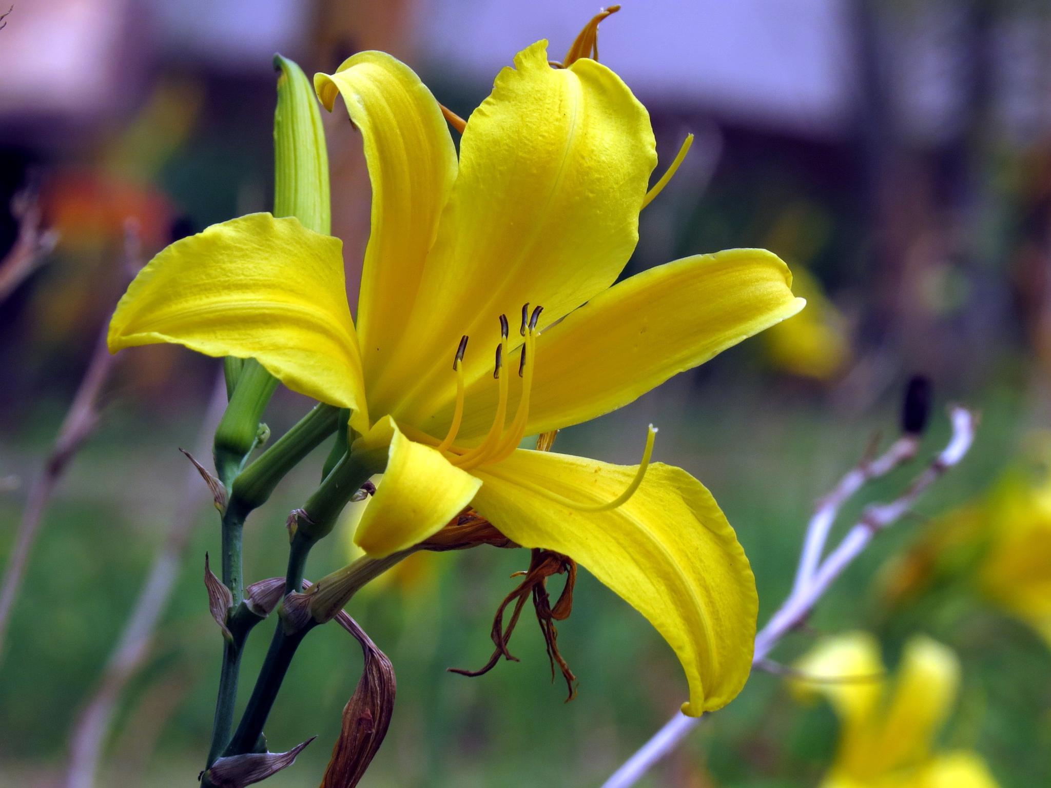 Flor do Belvedere by luismarcio