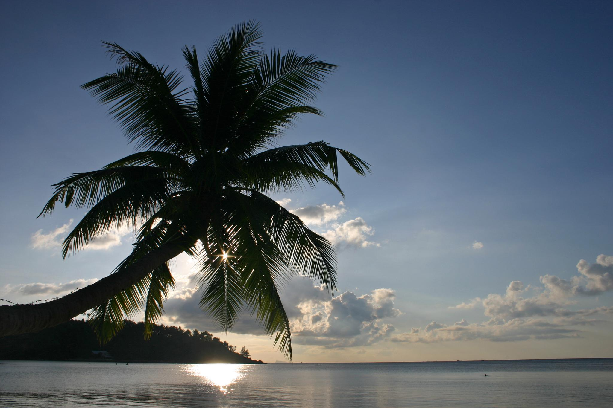 Palm Tree Sunset by Fraser McCulloch