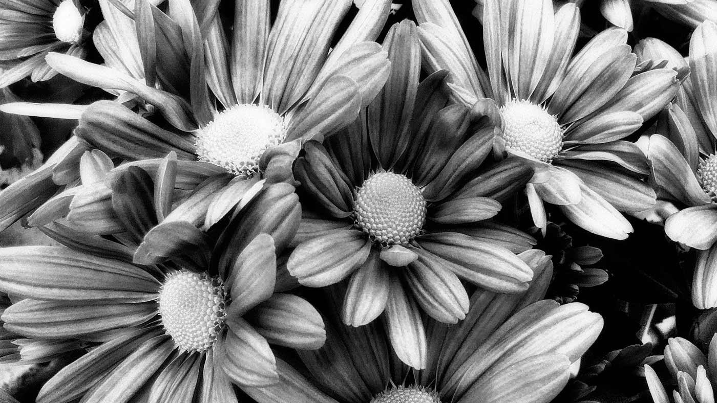 autumnWinter_23102016 by Carlos Gamelas