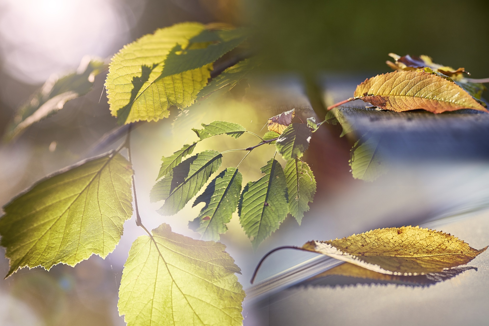 Autumnleaves by Roberto_69