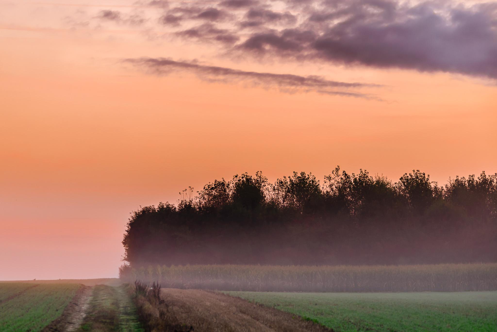 Mist on the countryside by Frédéric Masure