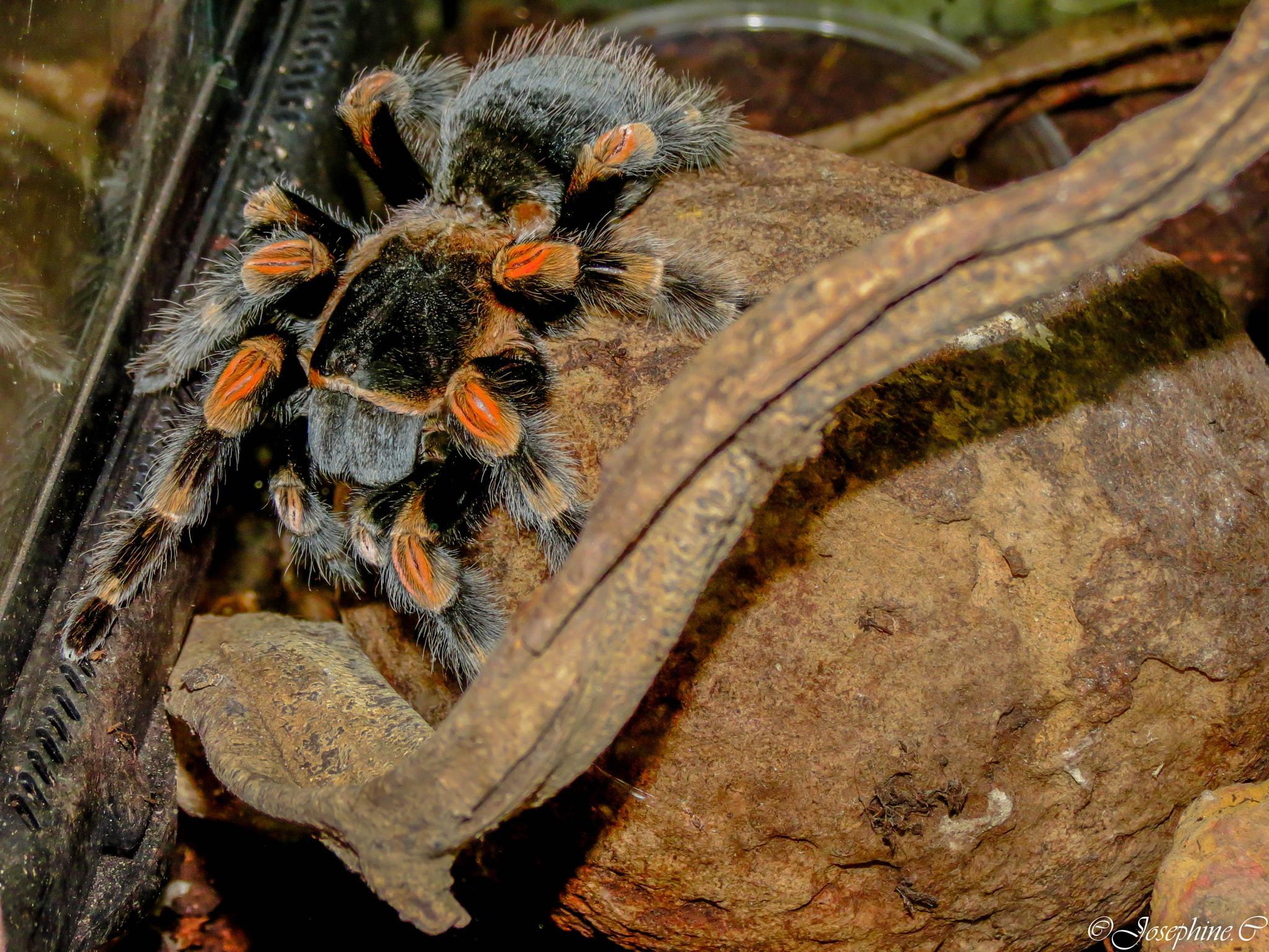 Photo in Animal #une araignée de guyane..