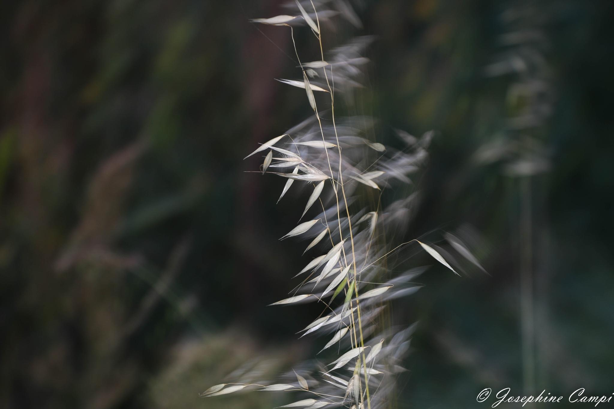 la nature  by josephine Campi