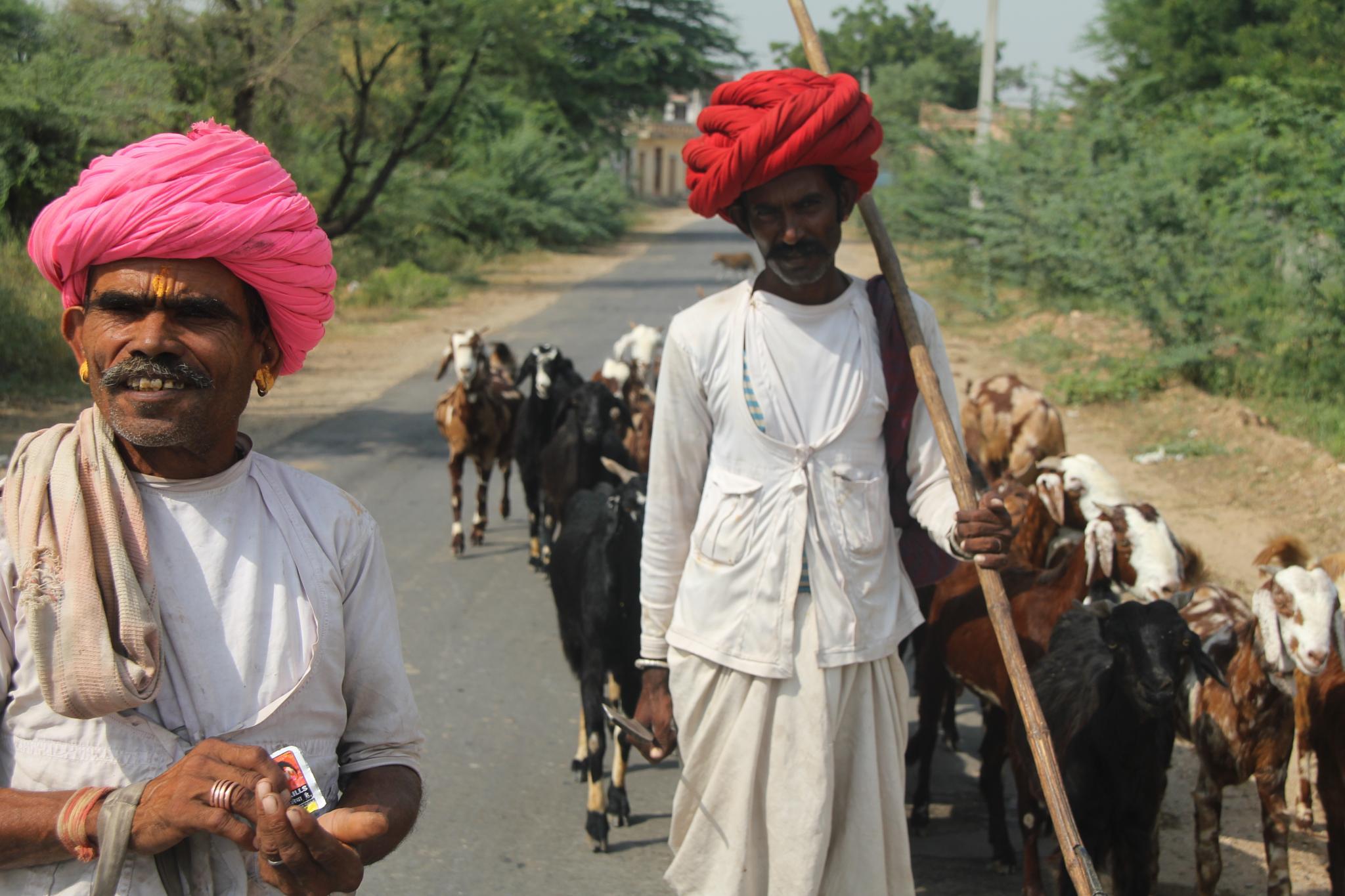 Shepherds of Rajasthan, India by jamilsayed