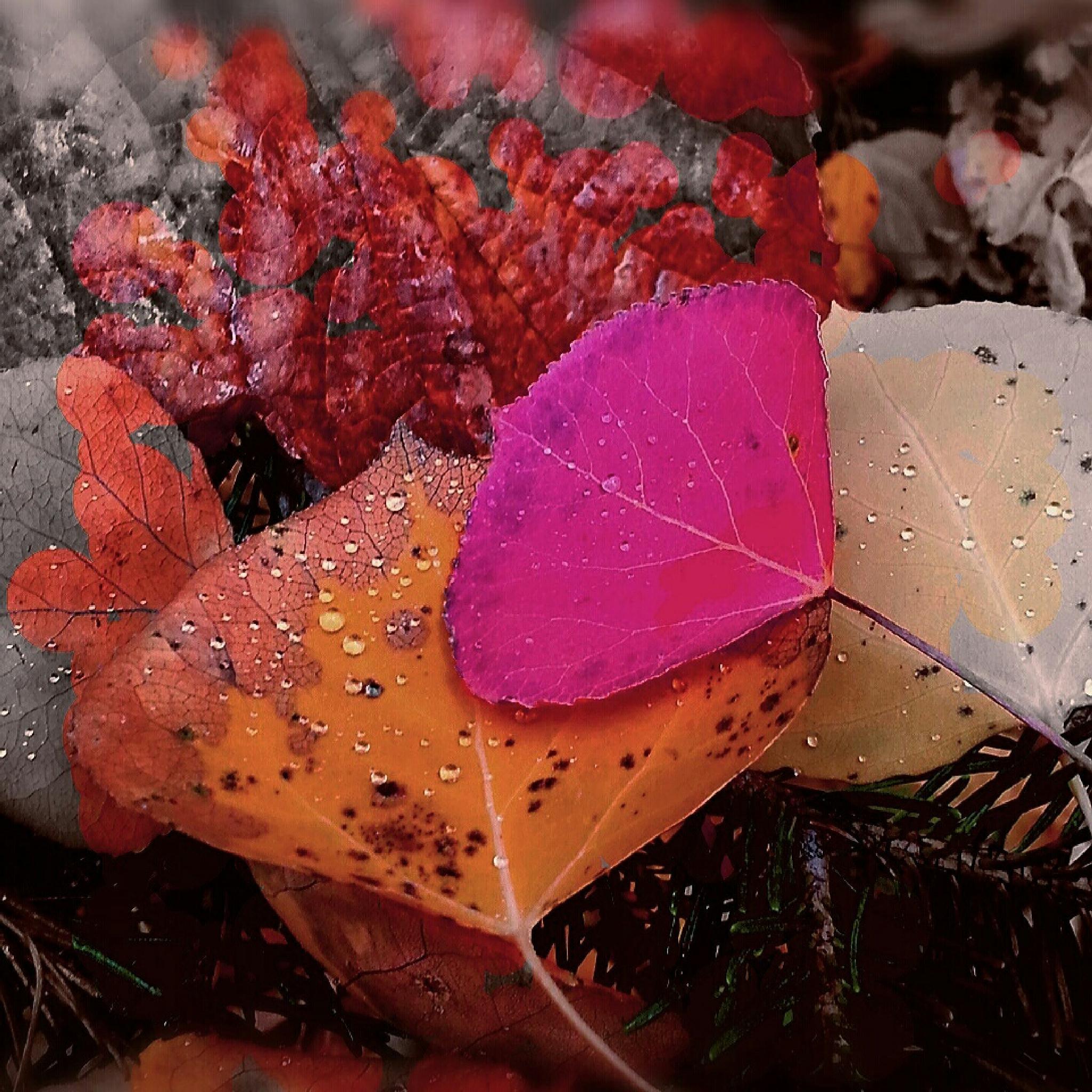 Color Fader  by POLMusic