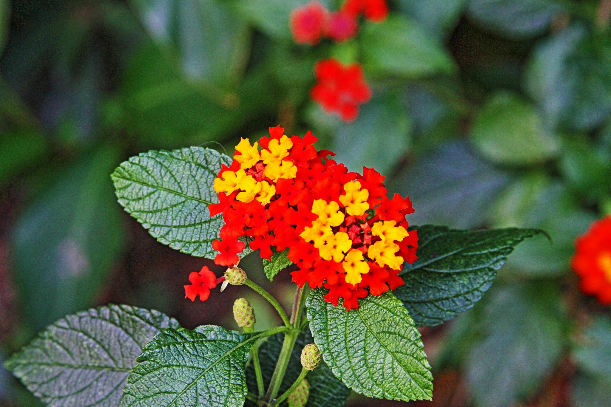 flower cluster by Robert Pelletier