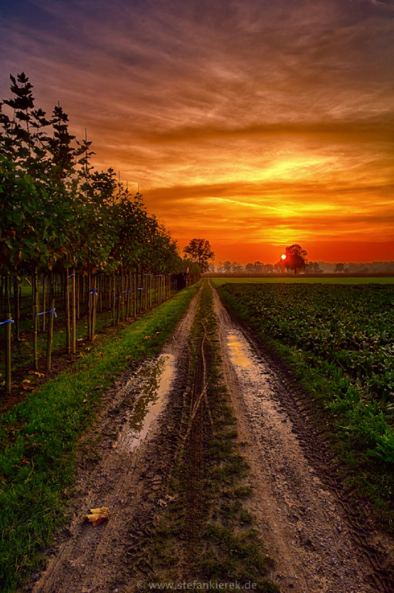Photo in Landscape #trees #sunshine #sunset #way #road