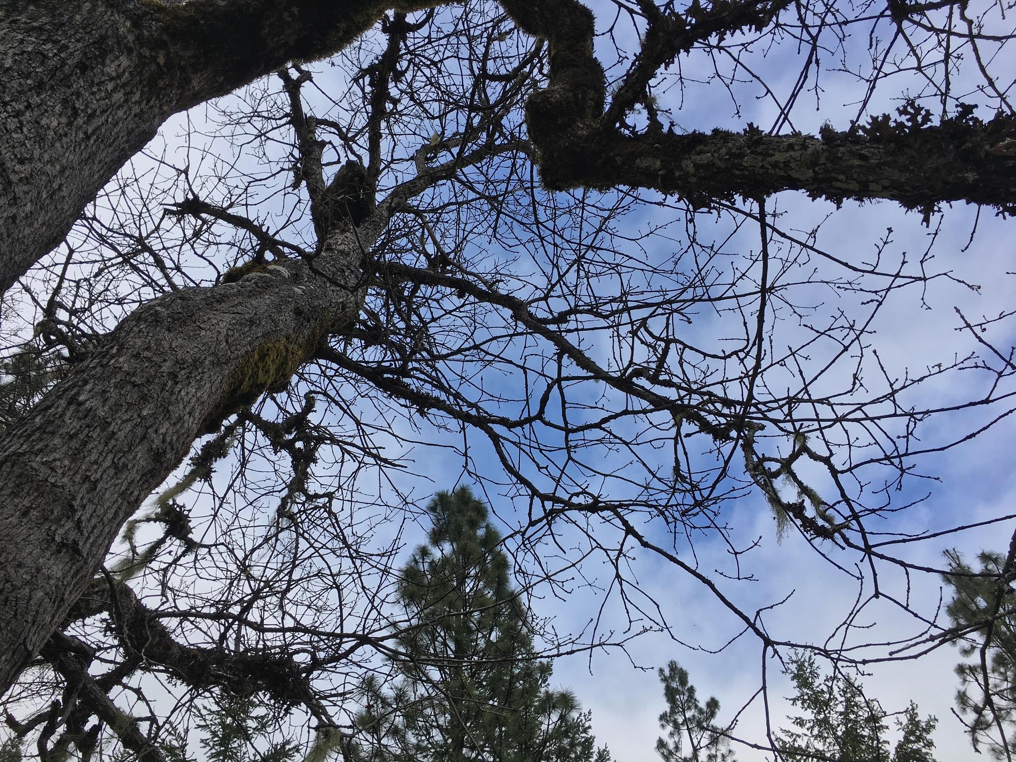 Trees by Kons0ul