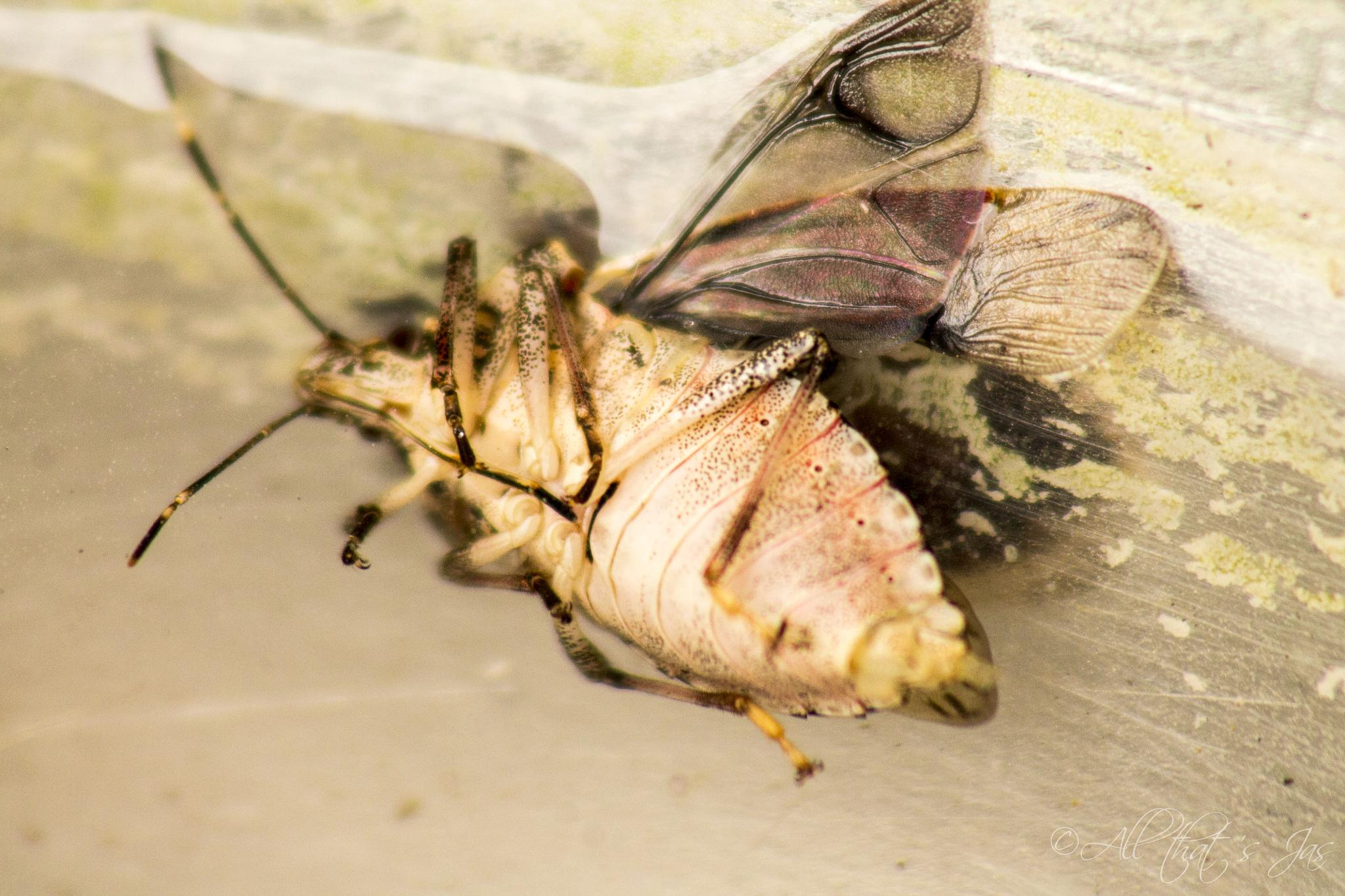 Photo in Animal #critters #bugs #dead bug