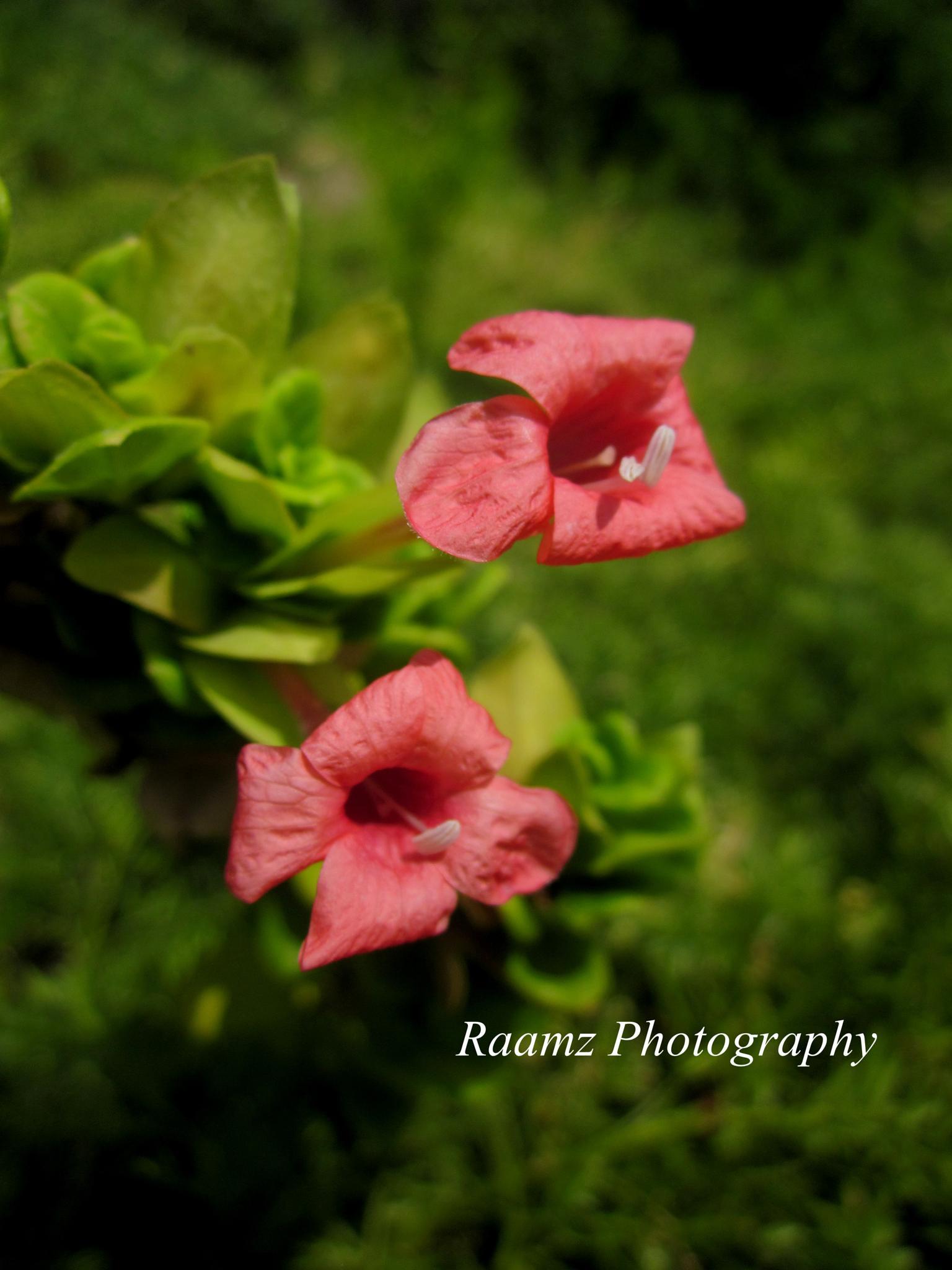 Flower by ramadevireddy