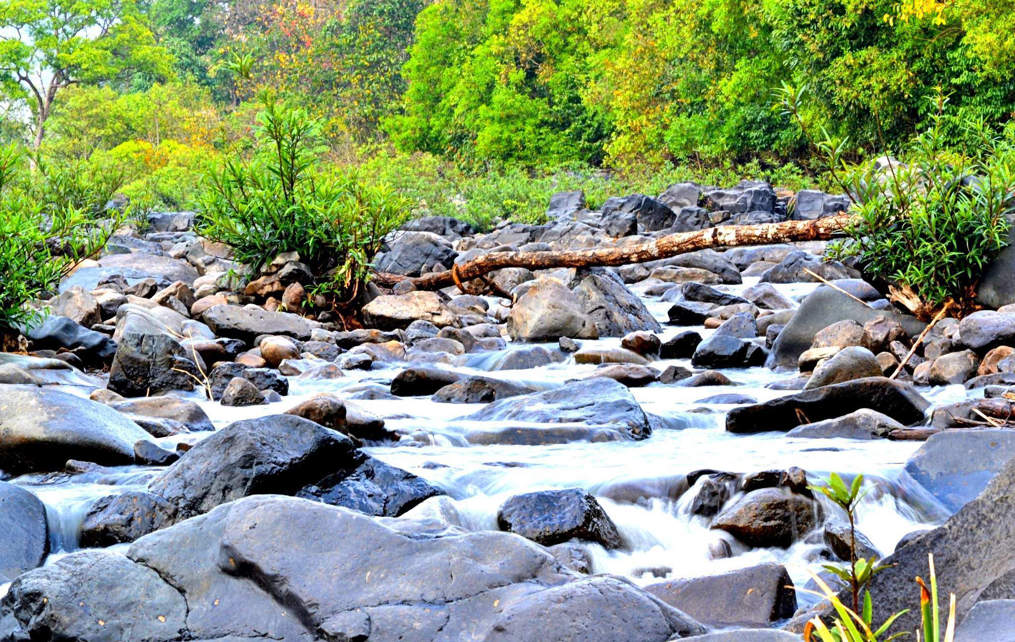 Nature looks beyond beautiful by Shrey Ansh