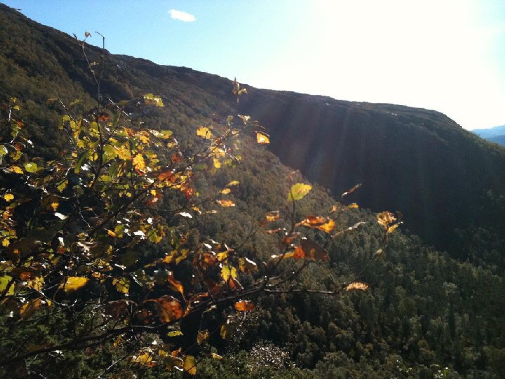 Fall by gunnhelen.sture.