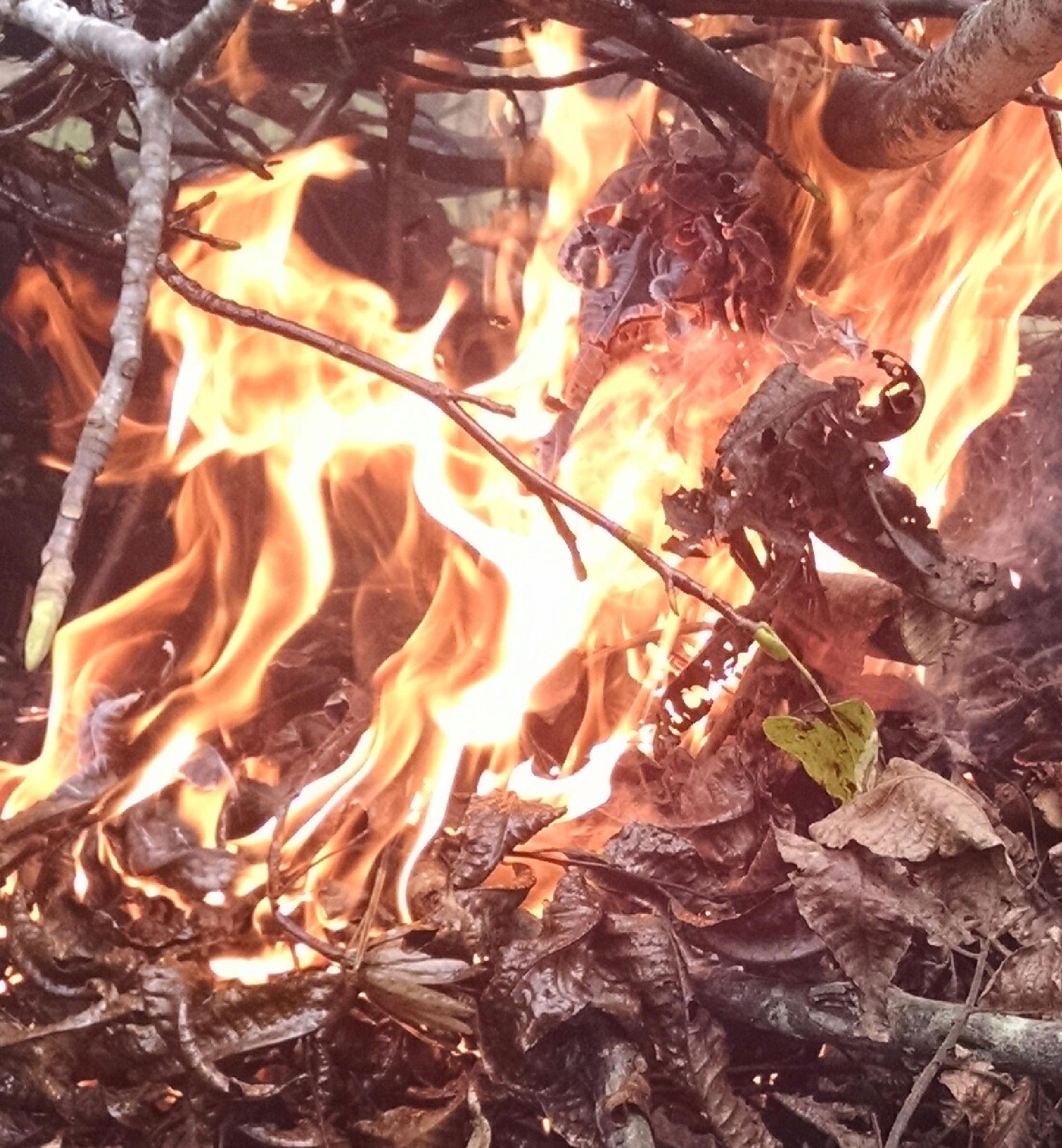 fallfire by 1deborahhicks