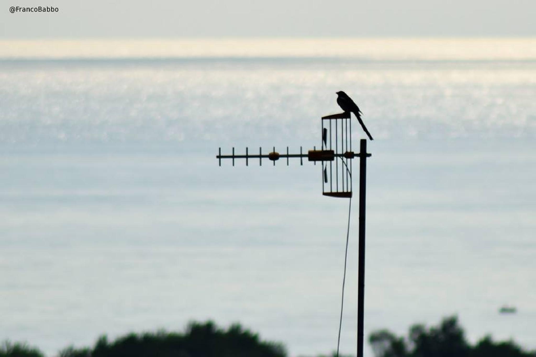 bird by Franco Babbo