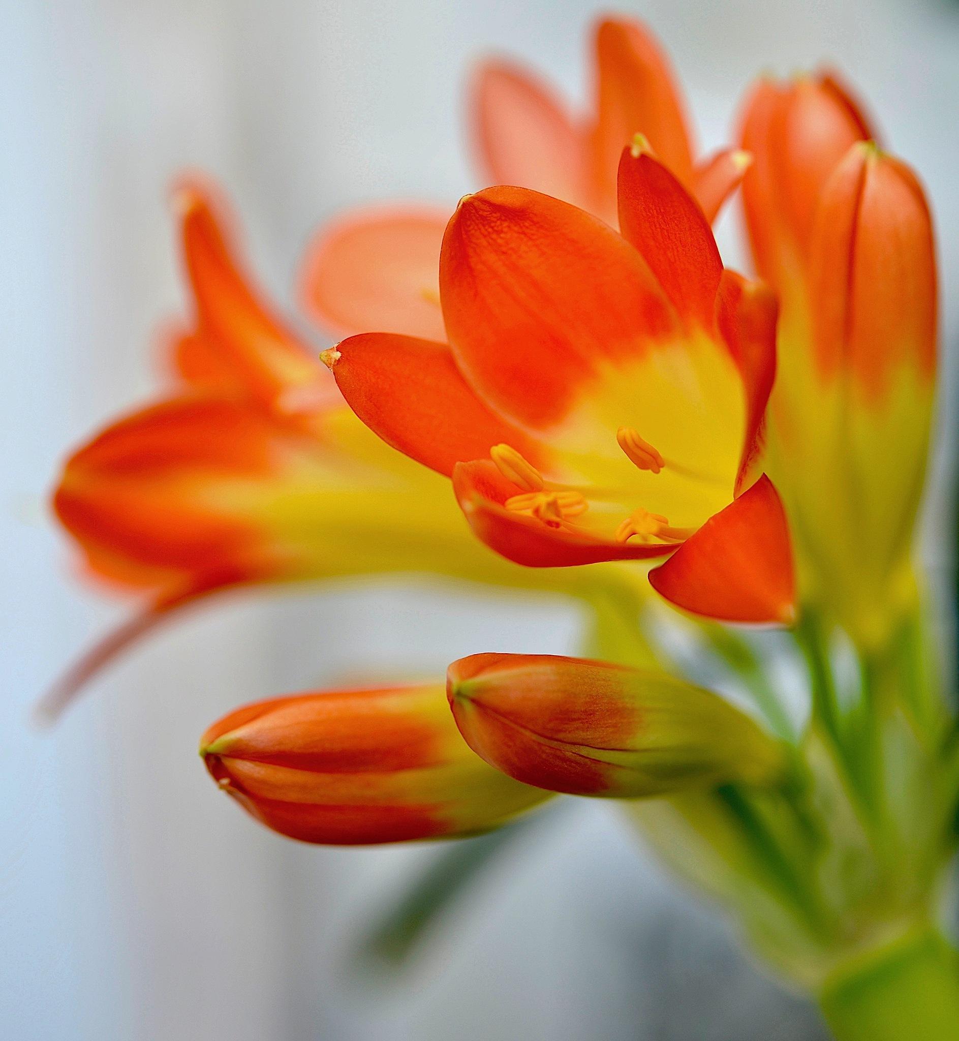 Flower by moeng