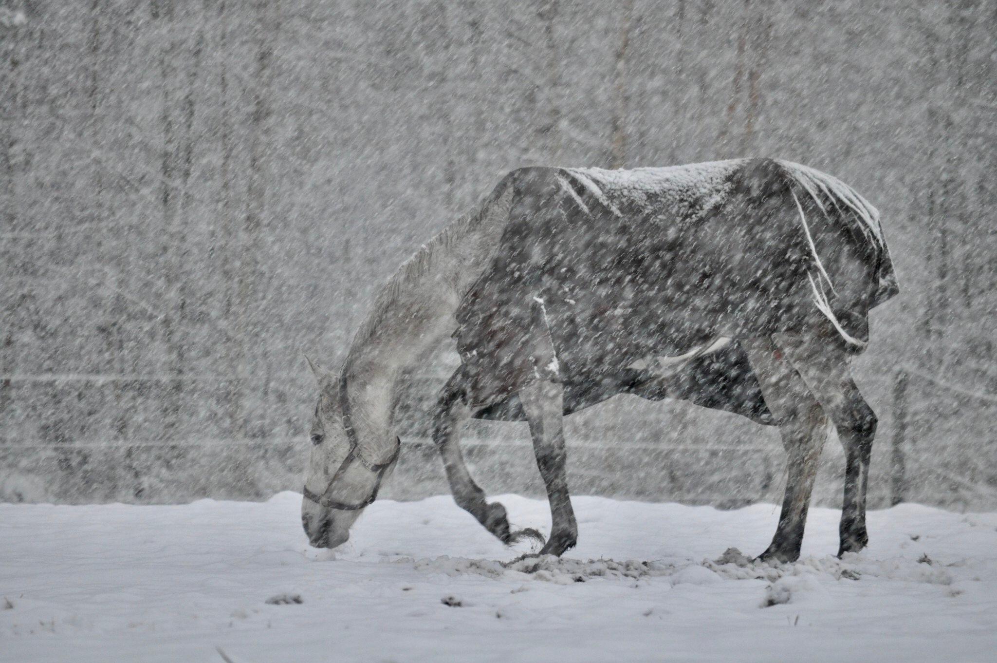 Horse by moeng