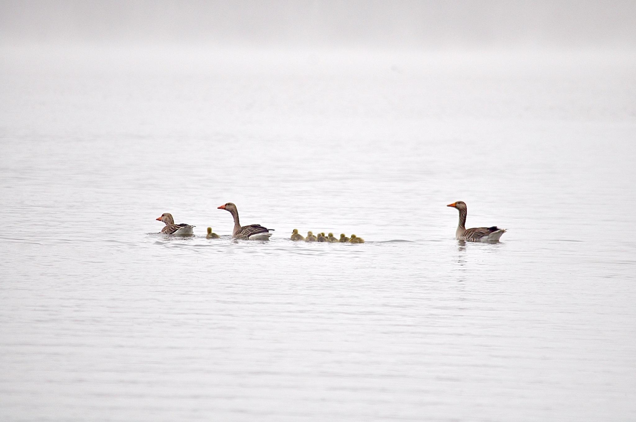 Birds by moeng