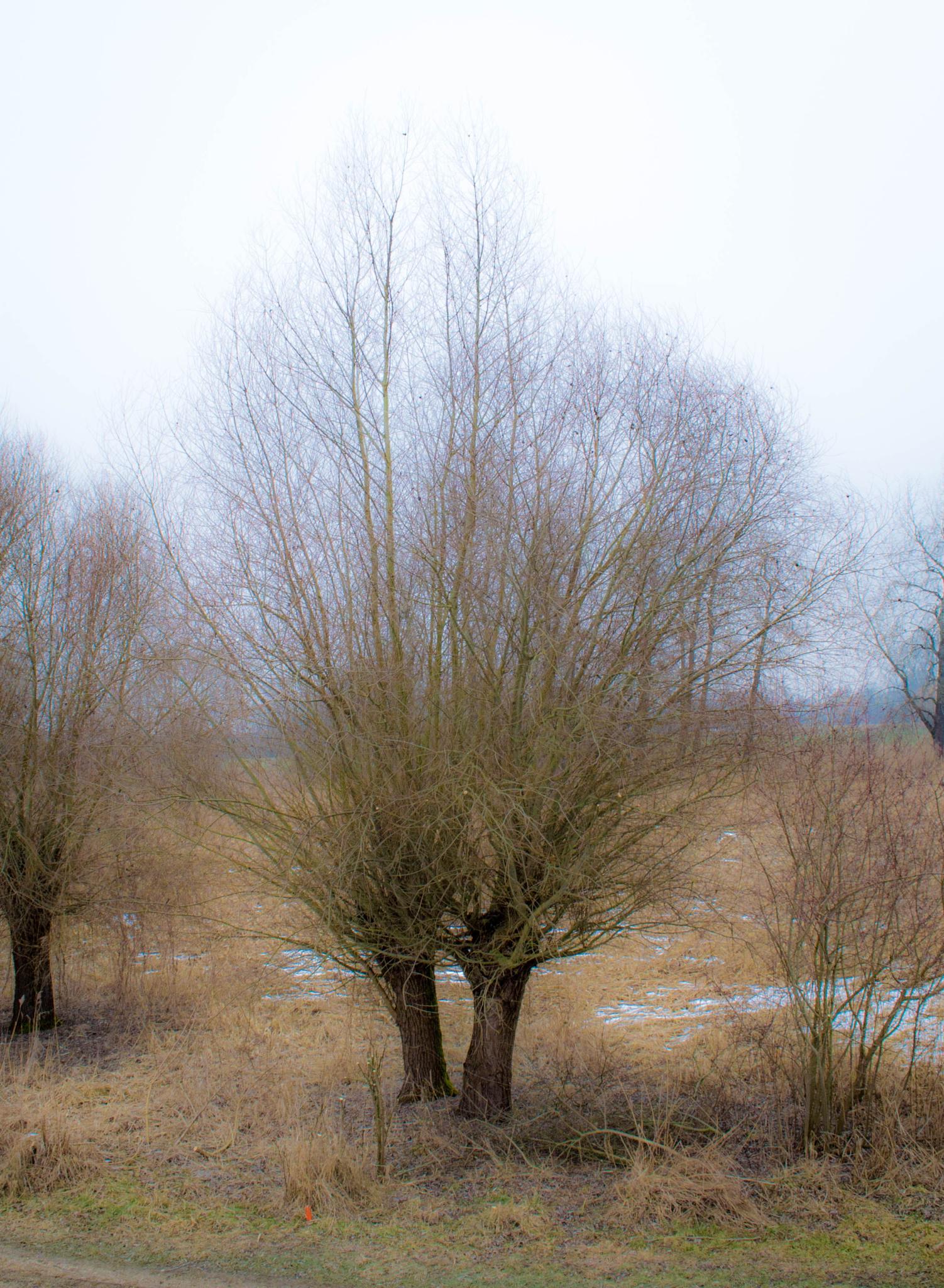 Bäume by BeFlash