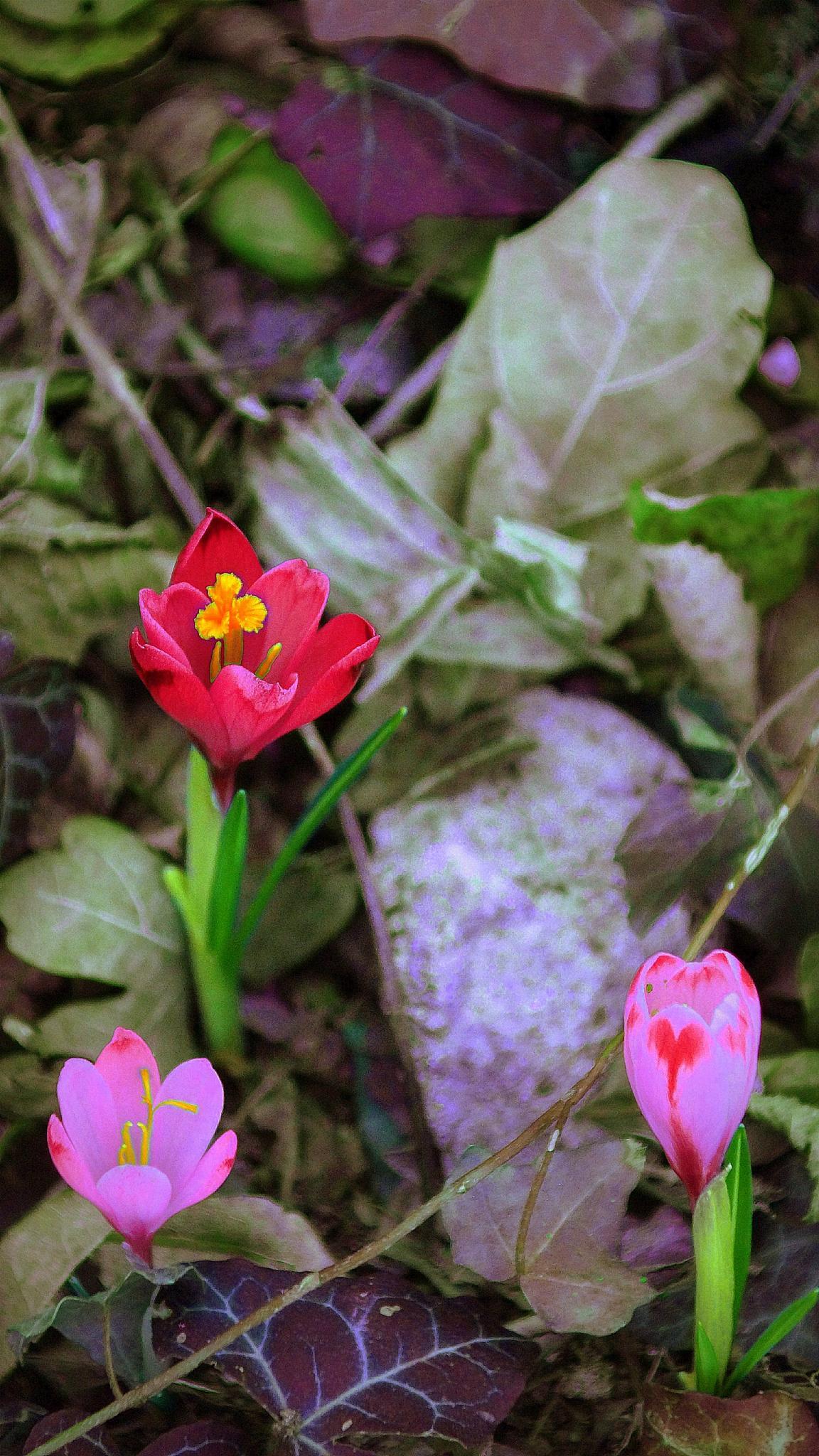 Some of colorful forest flowers by sreten nakićenović
