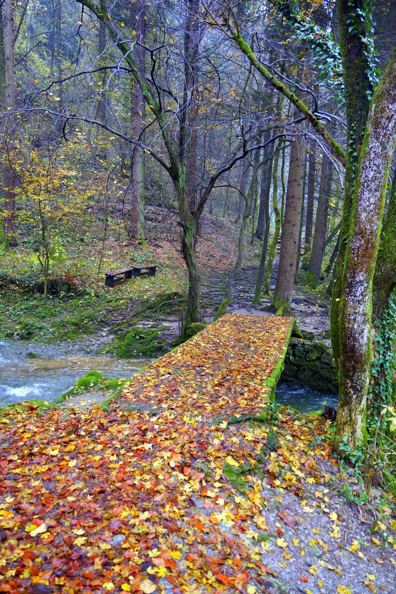 Autumn and little bridge by sreten nakićenović