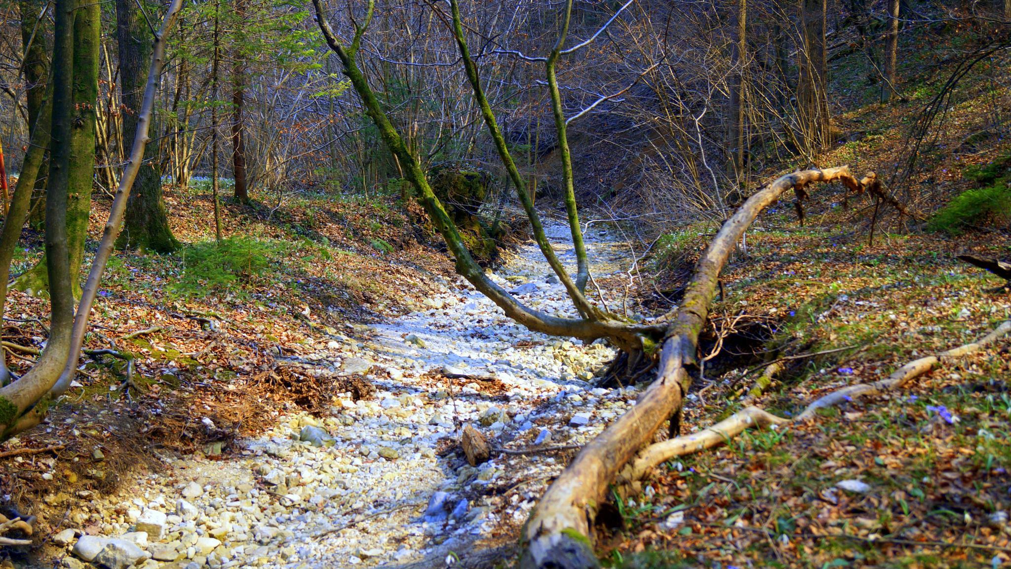 Forest by sreten nakićenović