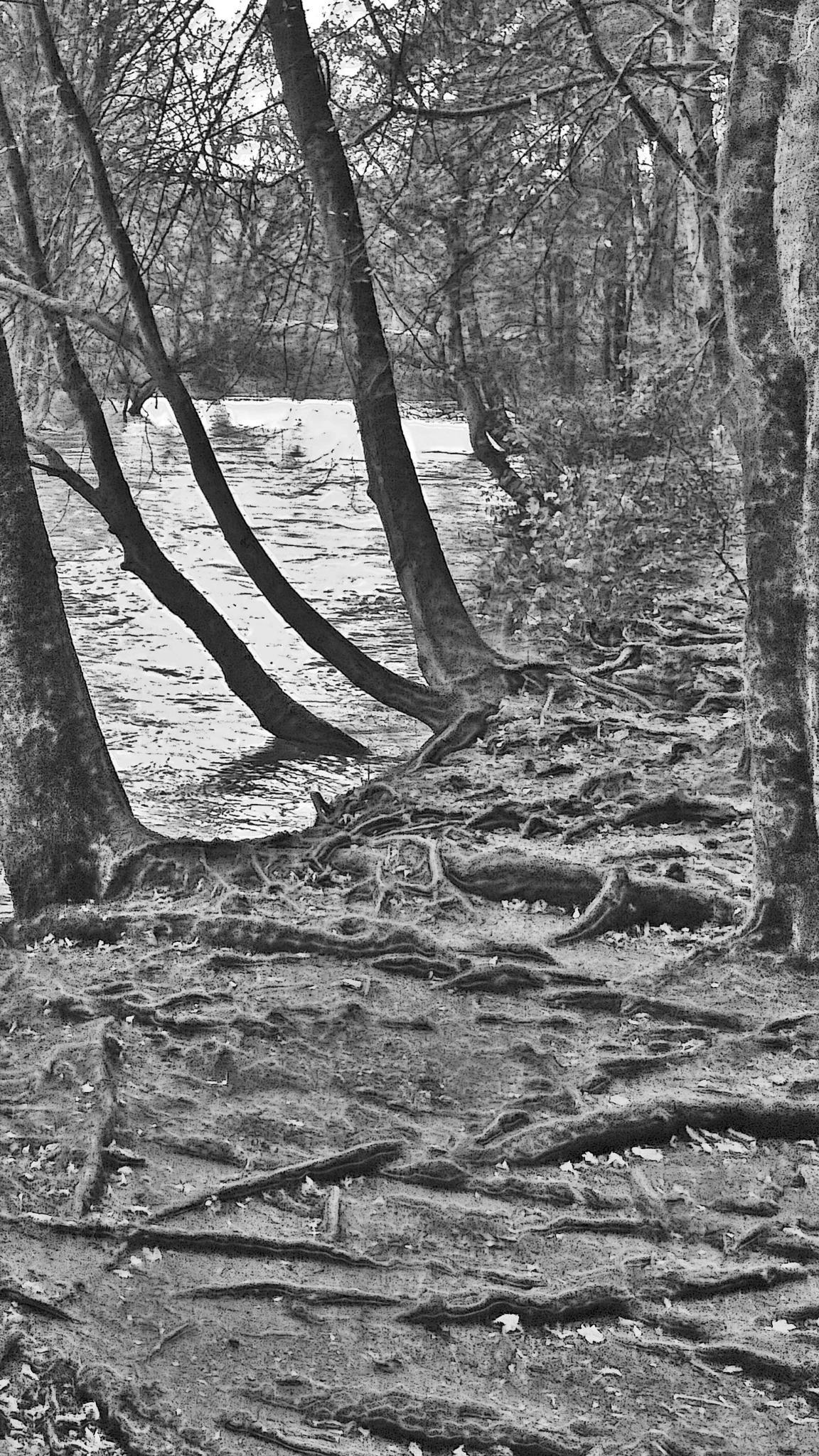 riverbank and roots of trees by sreten nakićenović