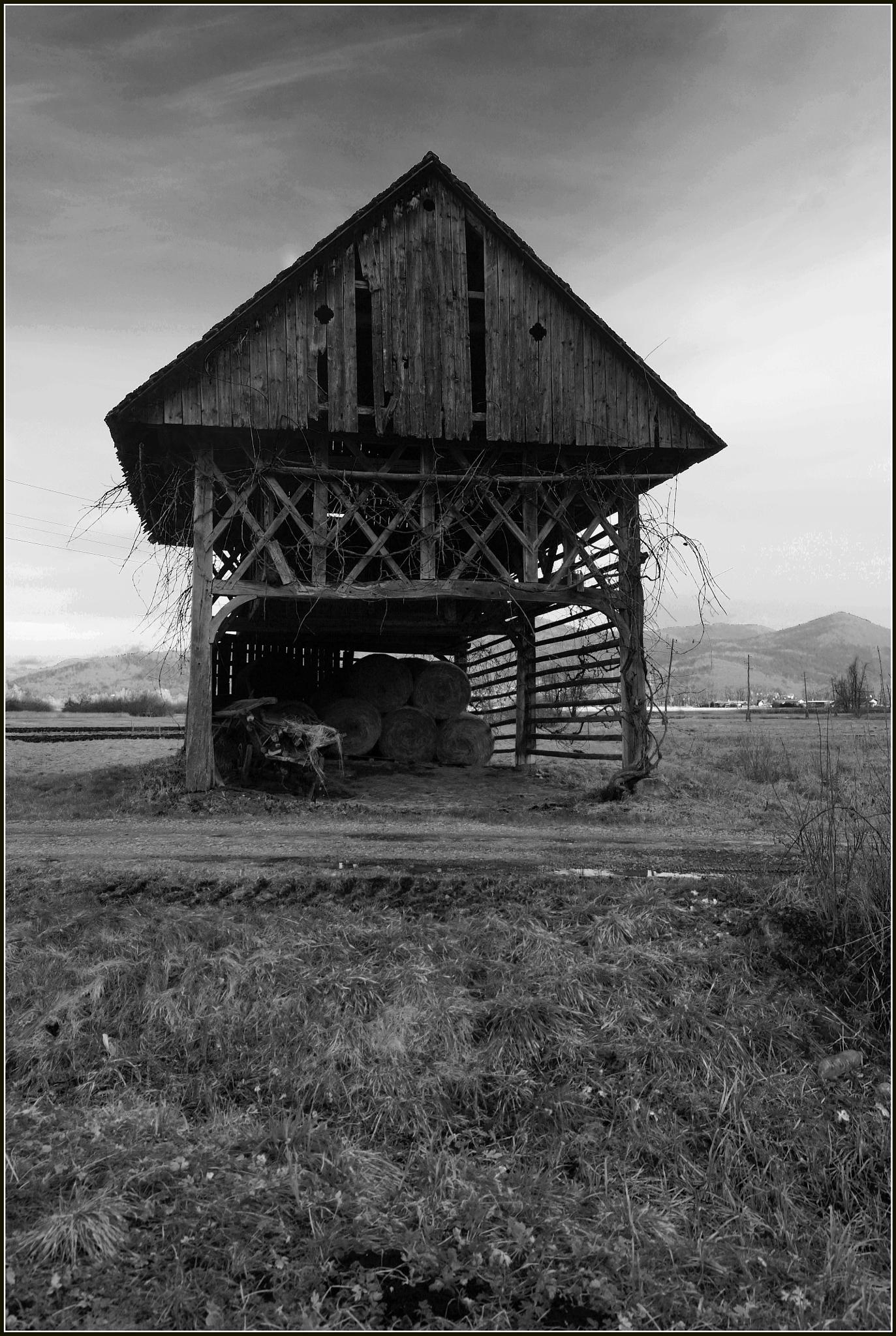 Black and White by sreten nakićenović