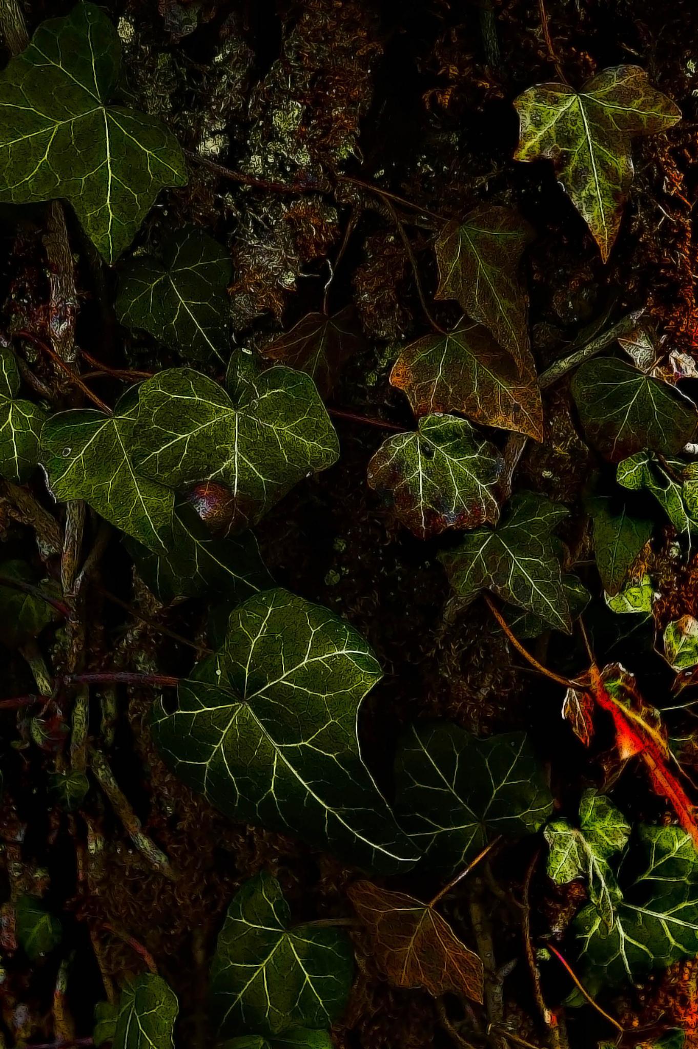 Ivy by sreten nakićenović