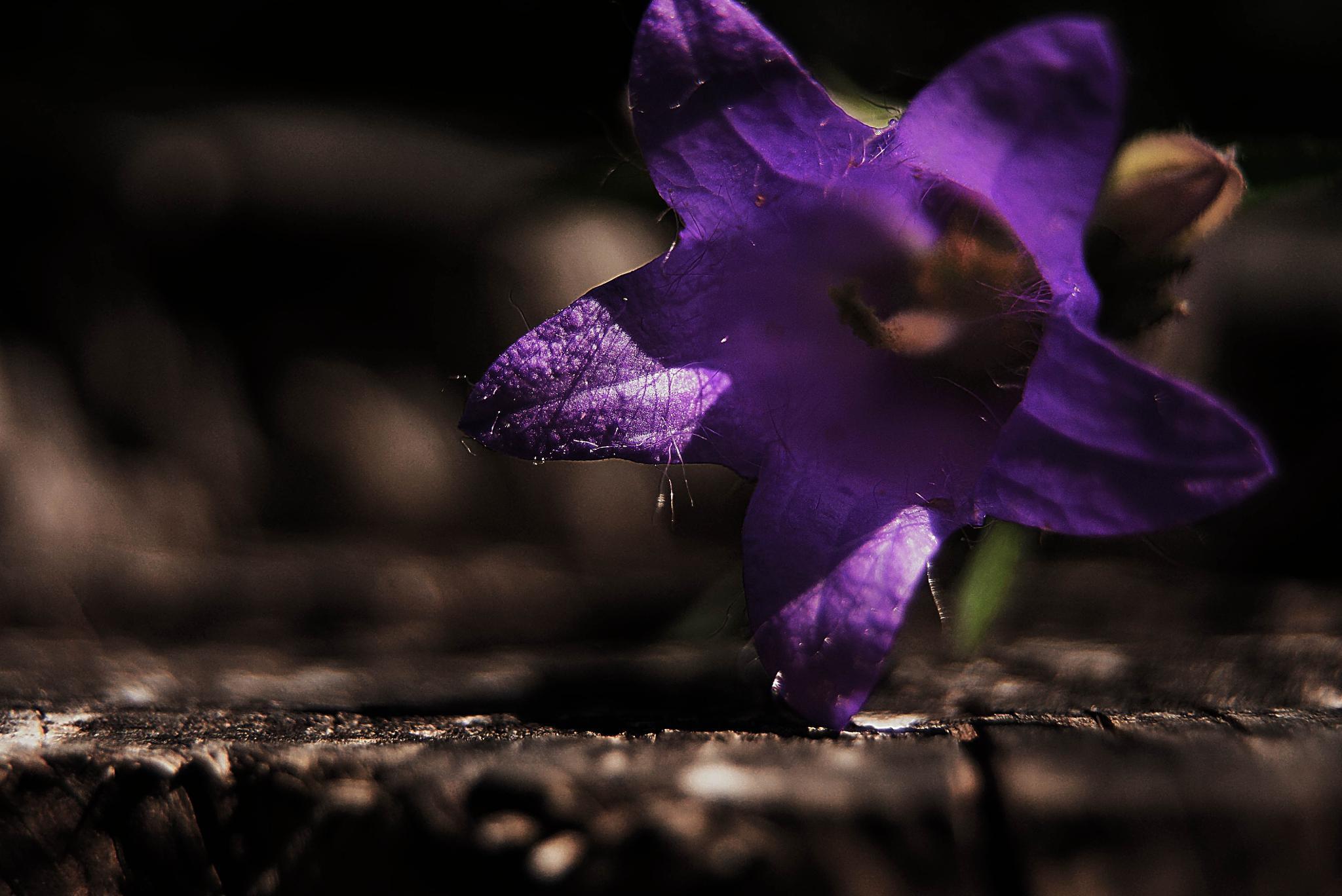one little purple by sreten nakićenović