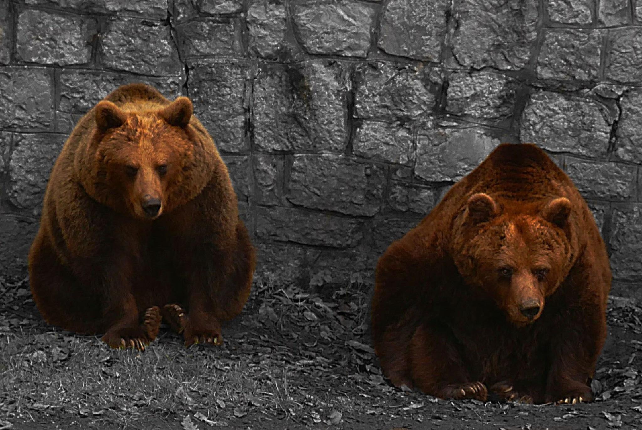 Zoo12 by sreten nakićenović