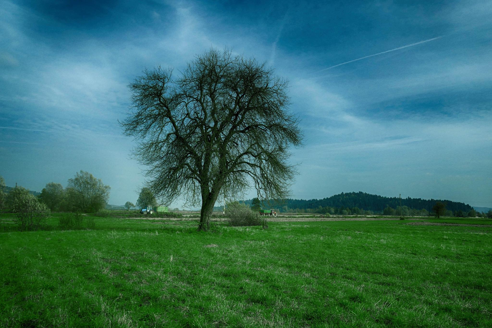 Drvo na proplanku by sreten nakićenović