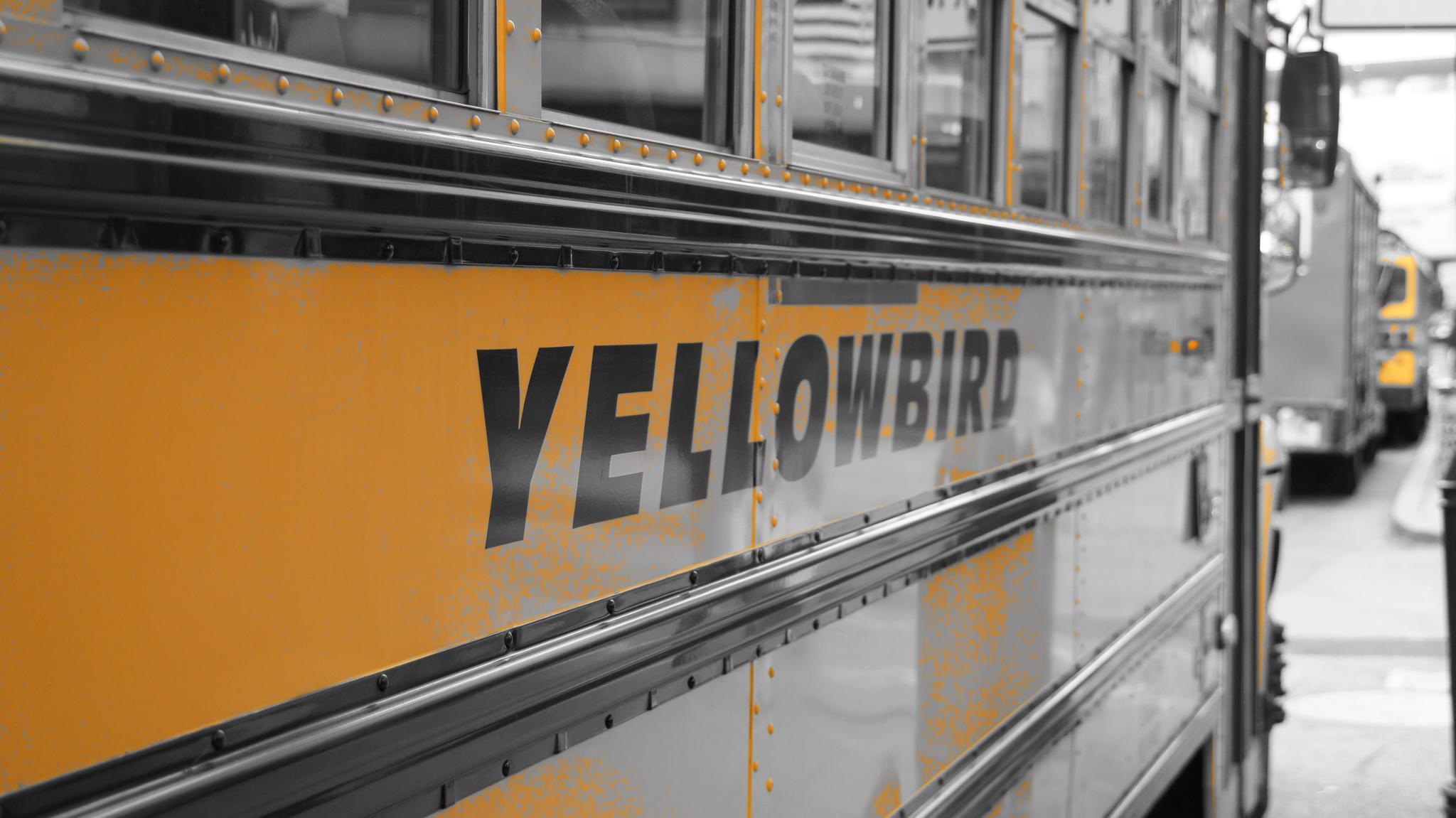 Yellowbird by ghislain