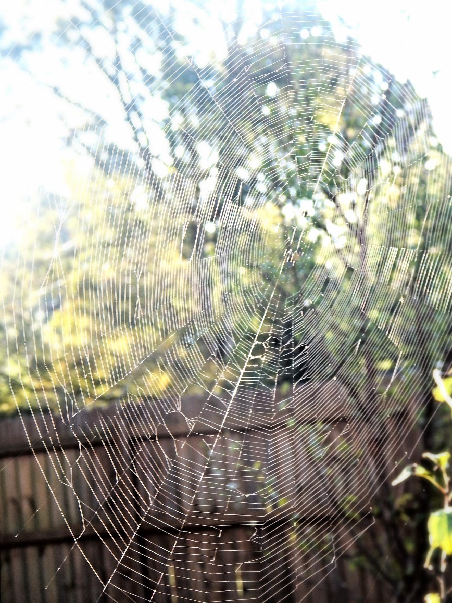 Welcome to my home-spider by shannen.kocher