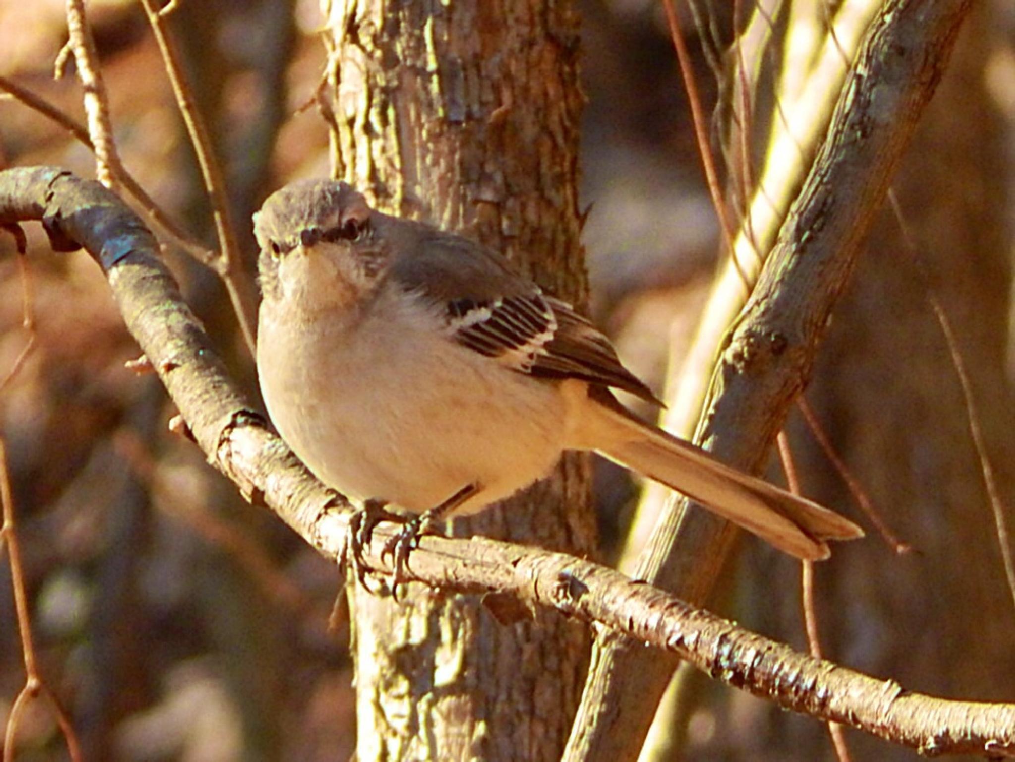 Bird of the fall by shannen.kocher