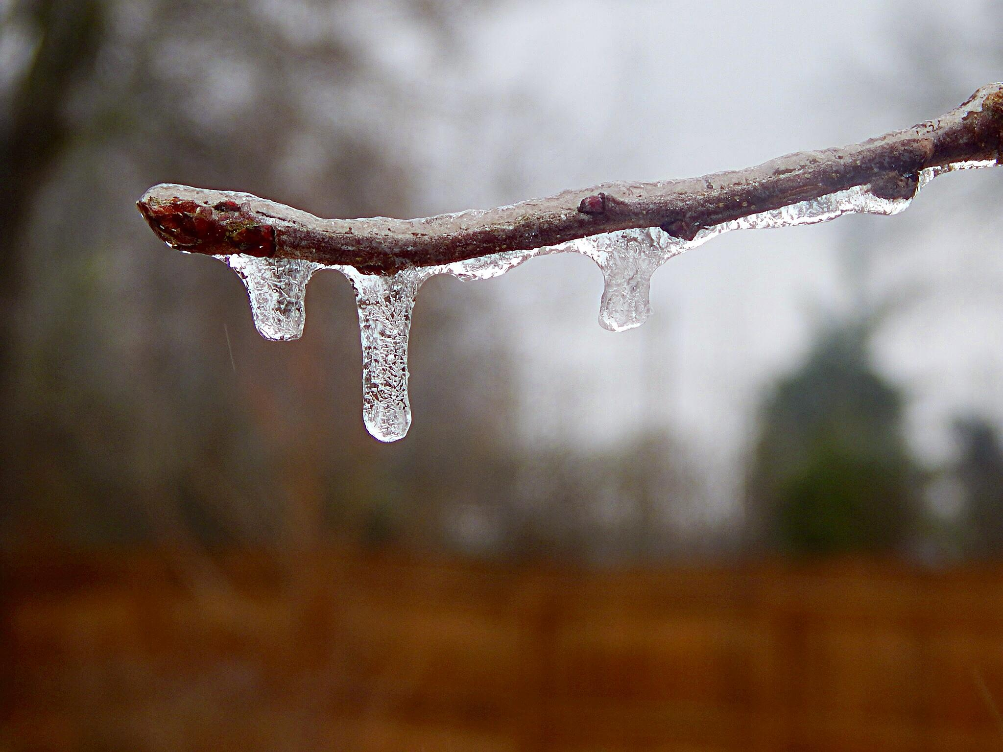 First frost 2013 by shannen.kocher